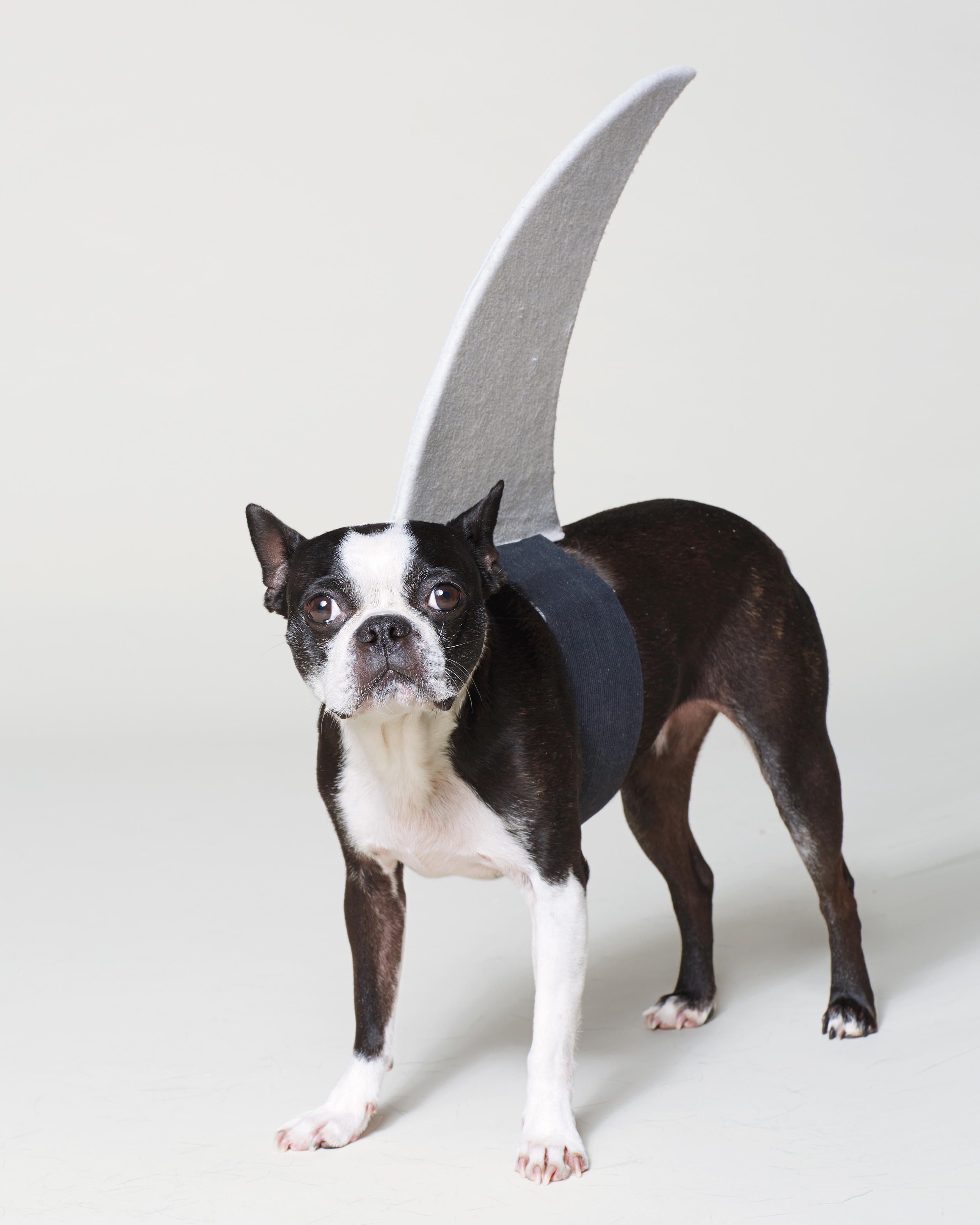 dog-shark-costume-192-d112263.jpg
