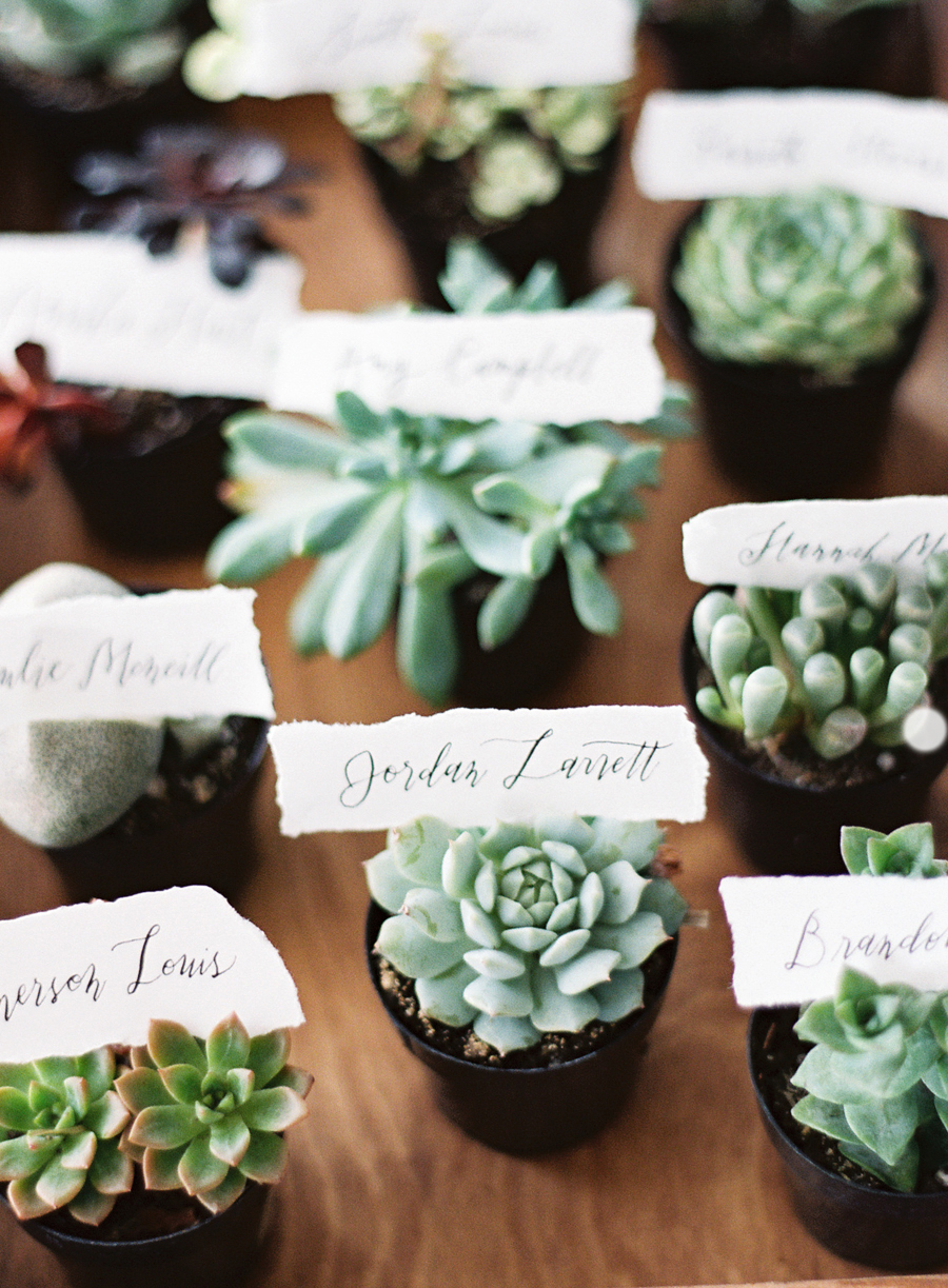 plant cupcake wedding favor succulent seating card