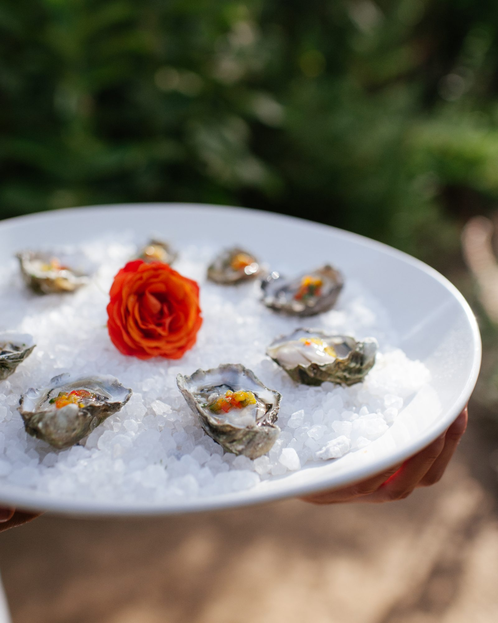julia-dave-wedding-oysters-0414.jpg