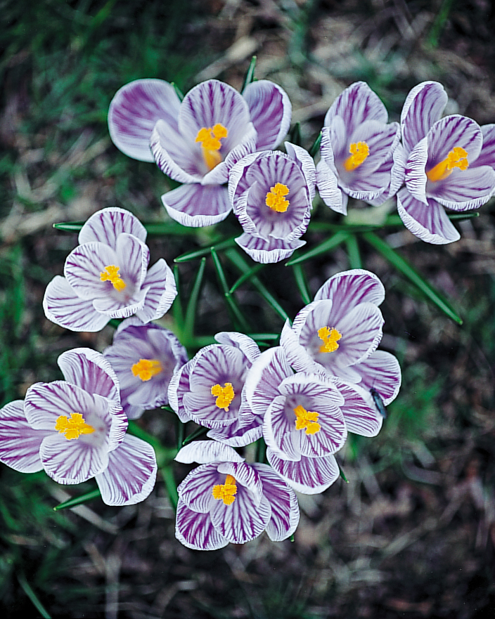 purple-flowers-goodthings-ml102n10-0115.jpg