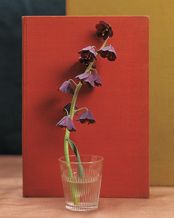 purple-on-red-flowers-goodthings-ml803w03-0115.jpg