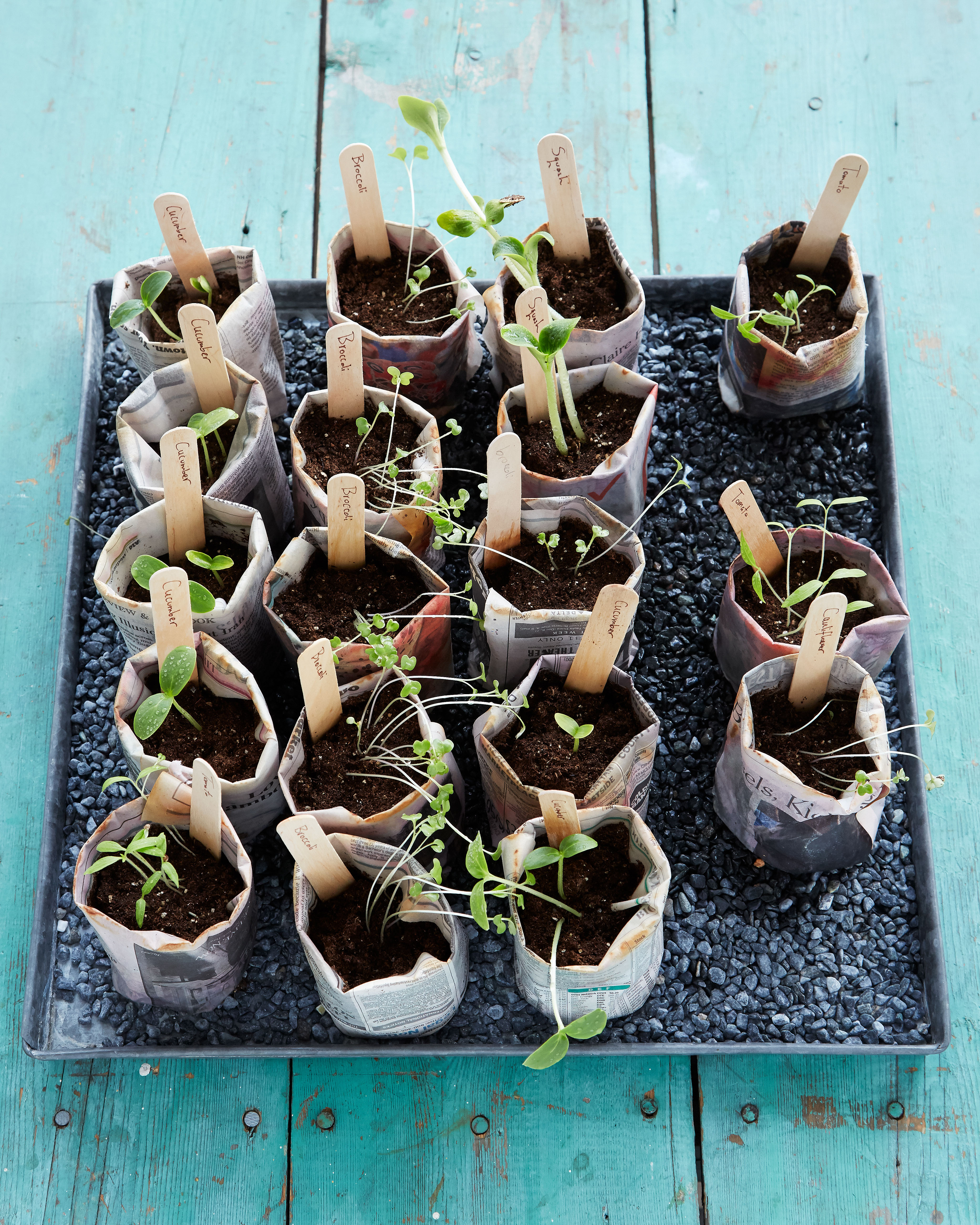 newspaper pots with seedlings