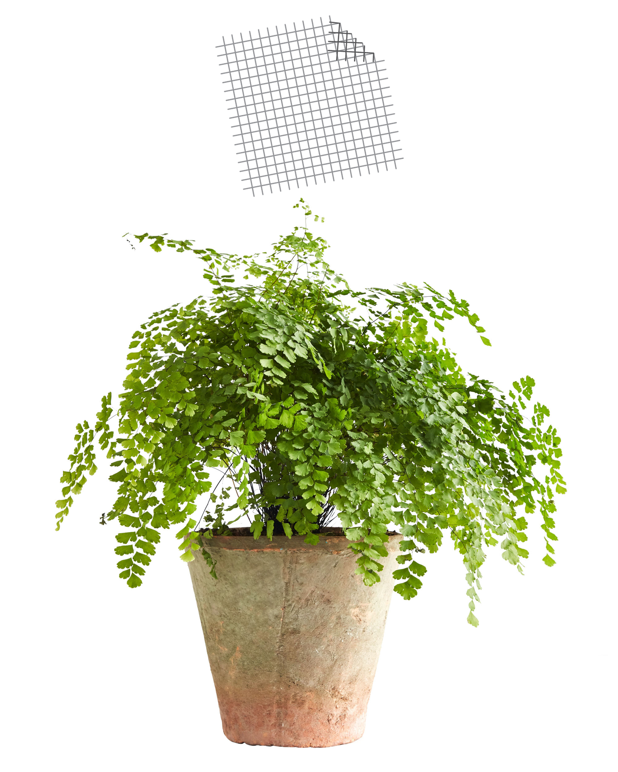 potted plant with screen