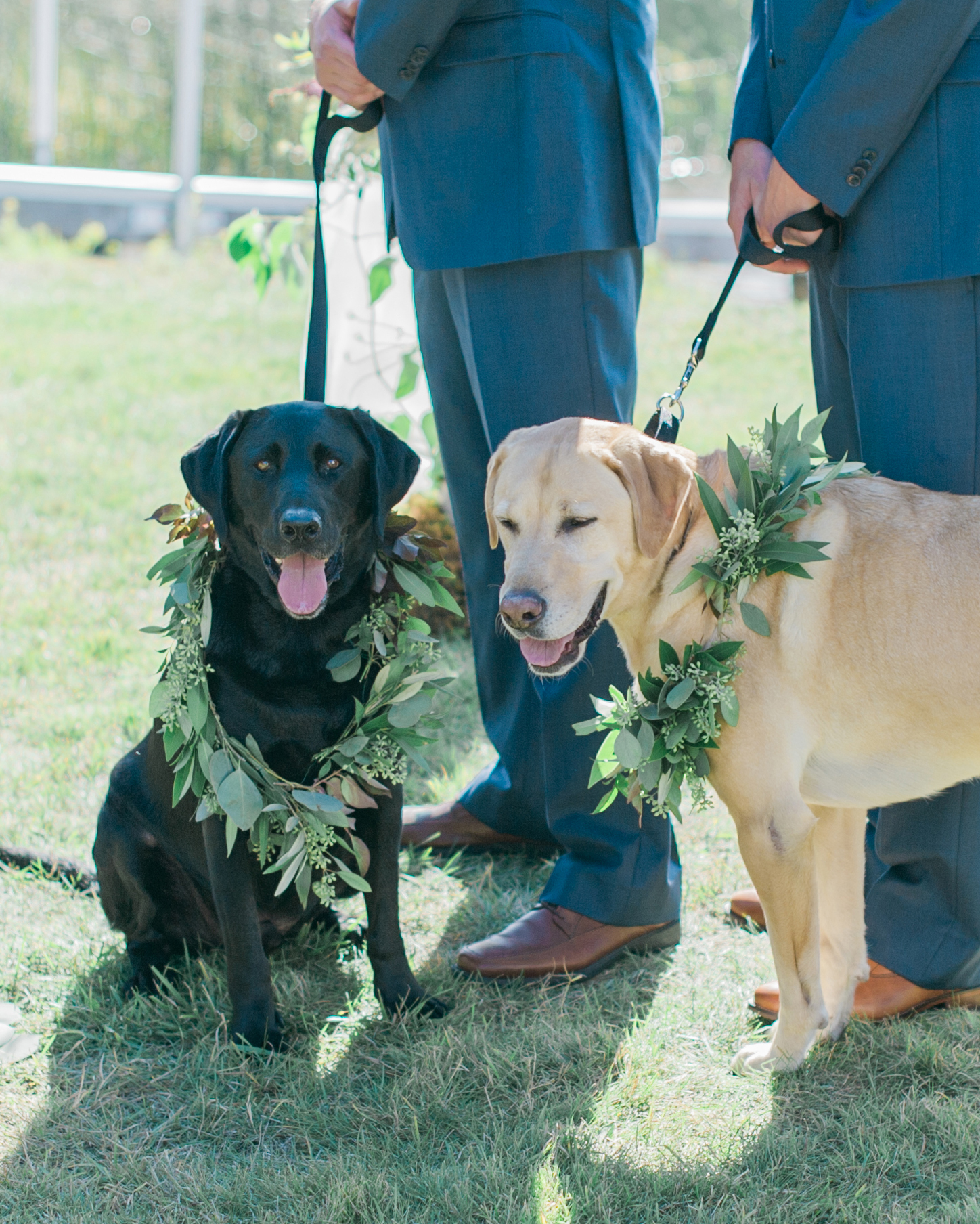 robin-kenny-wedding-dogs-114-s112068-0715.jpg