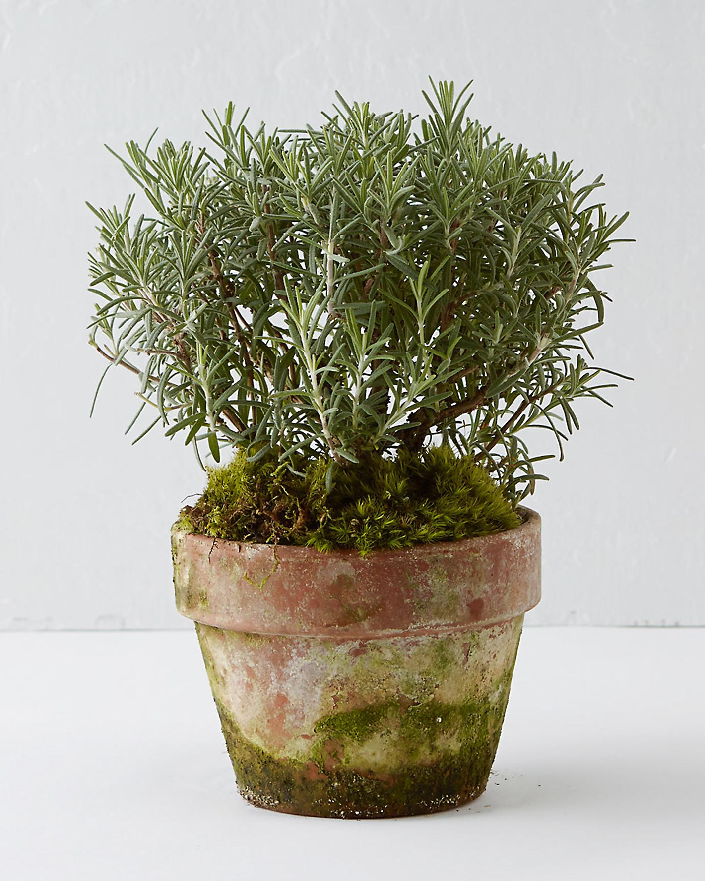 terrain-potted-plant-0715