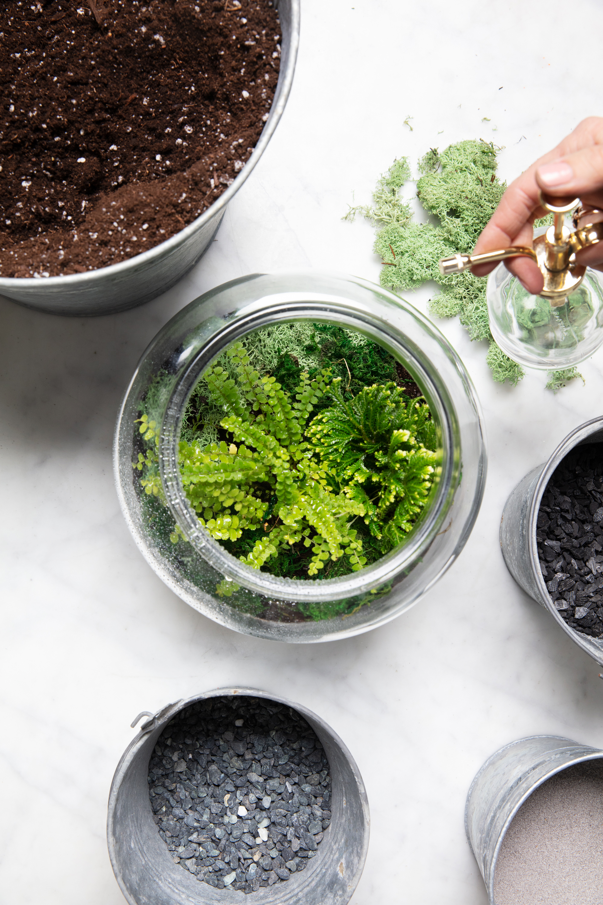terrarium watering plants