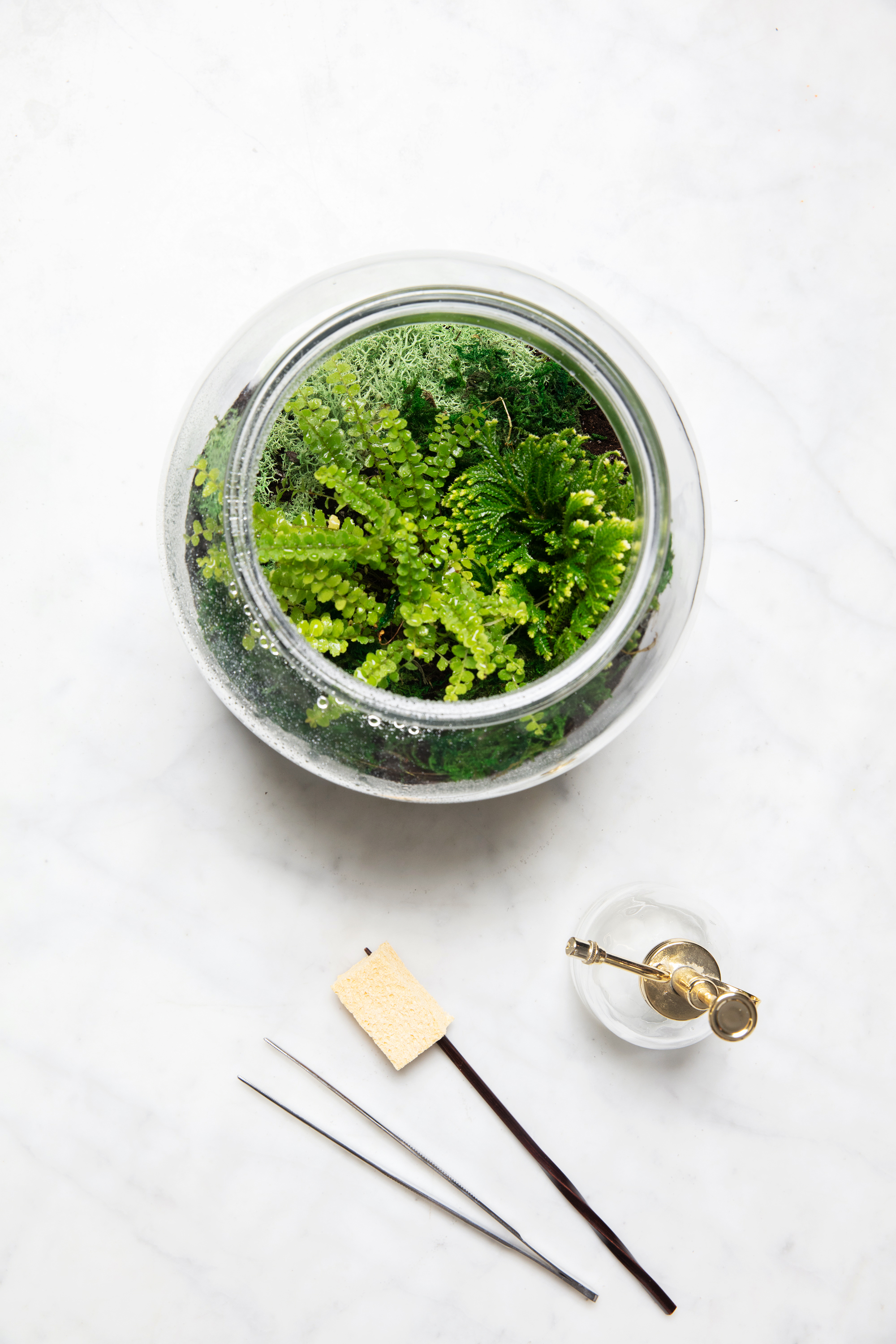 terrarium care tools