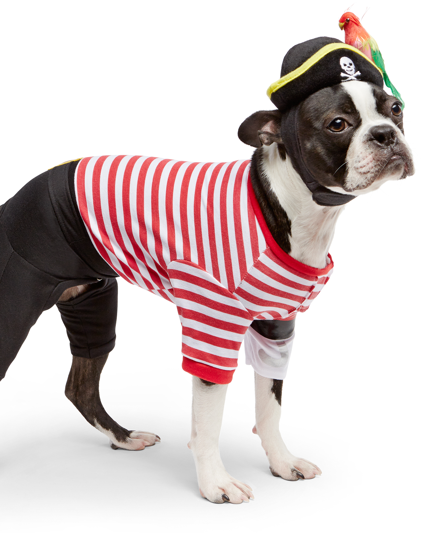 mspets-dog-halloween-piratecostume-mrkt-0915.jpg