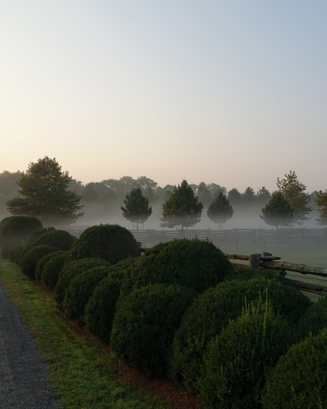Early-Morning Fog at My Farm