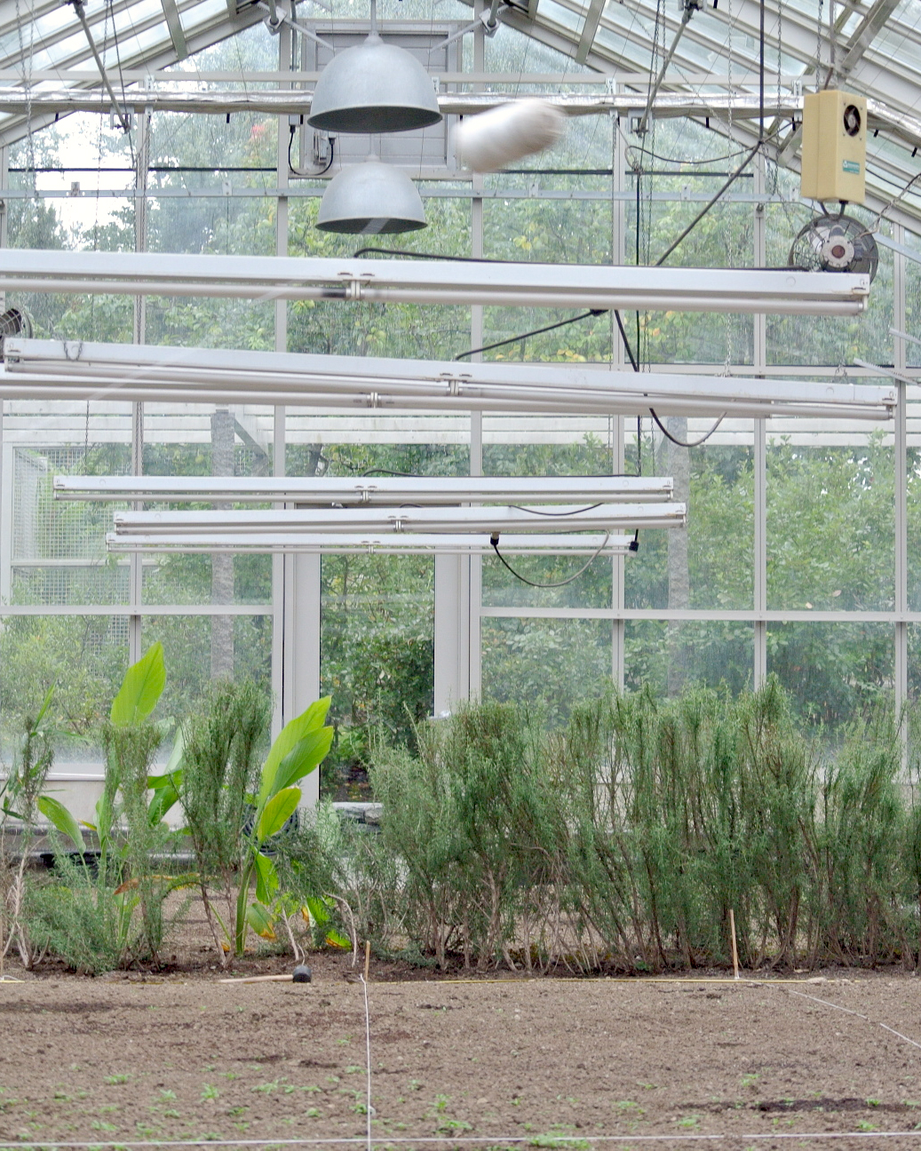 vegetable-greenhouse.jpg