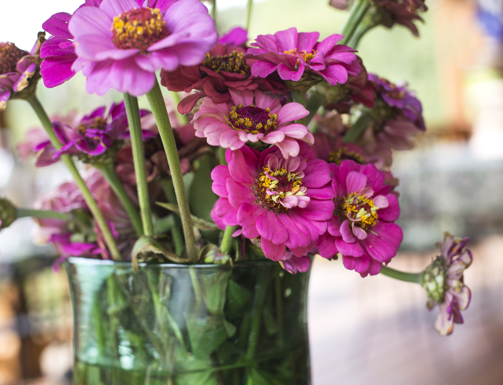 annuals for beginners