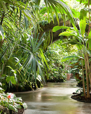 nyc-proposal-spots-enid-a-haupt-conservatory-0316.jpg