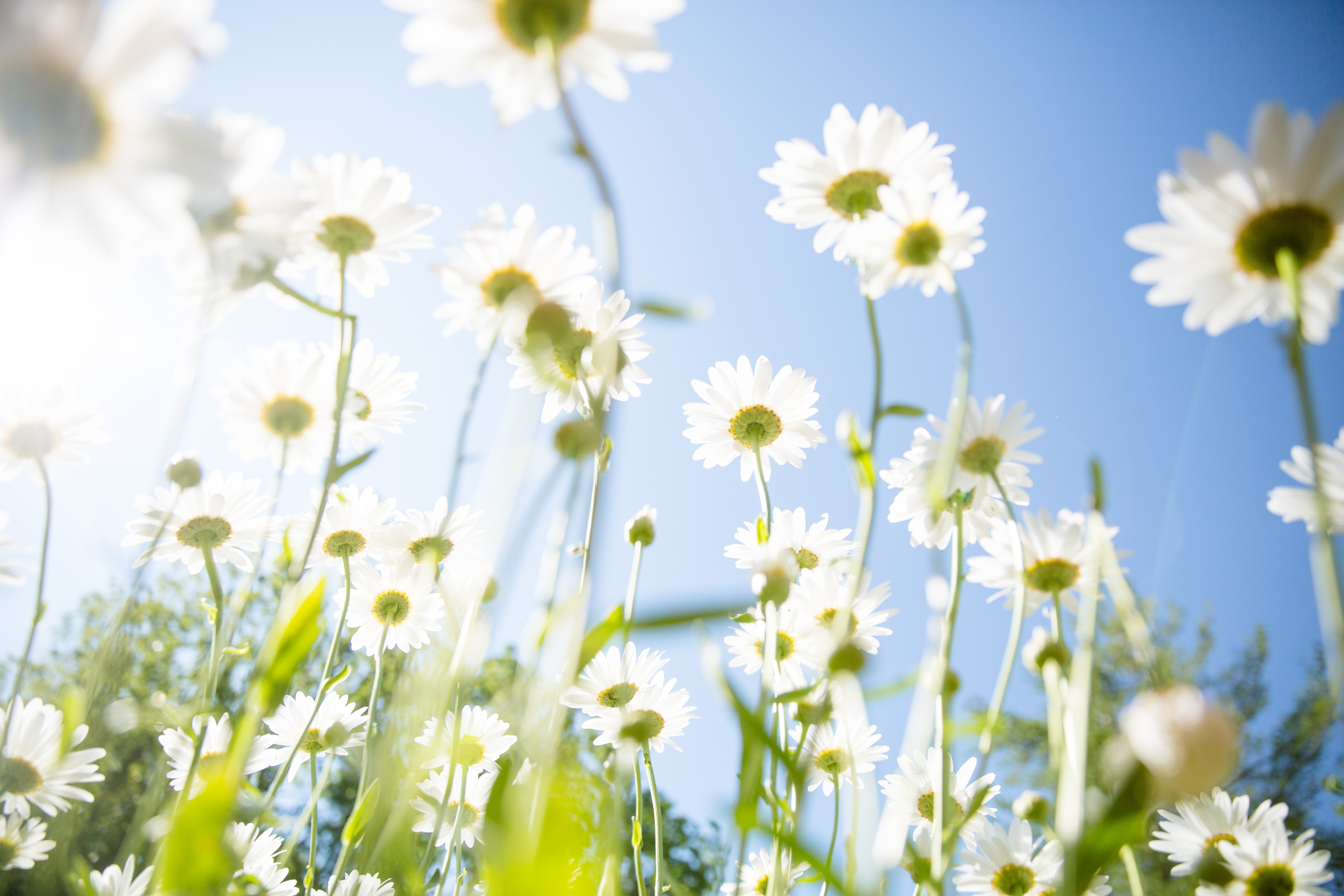 natural spring allergy remedies