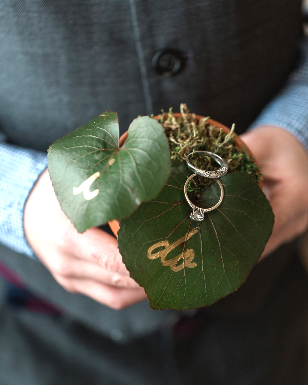 wedding rings on leafing plant