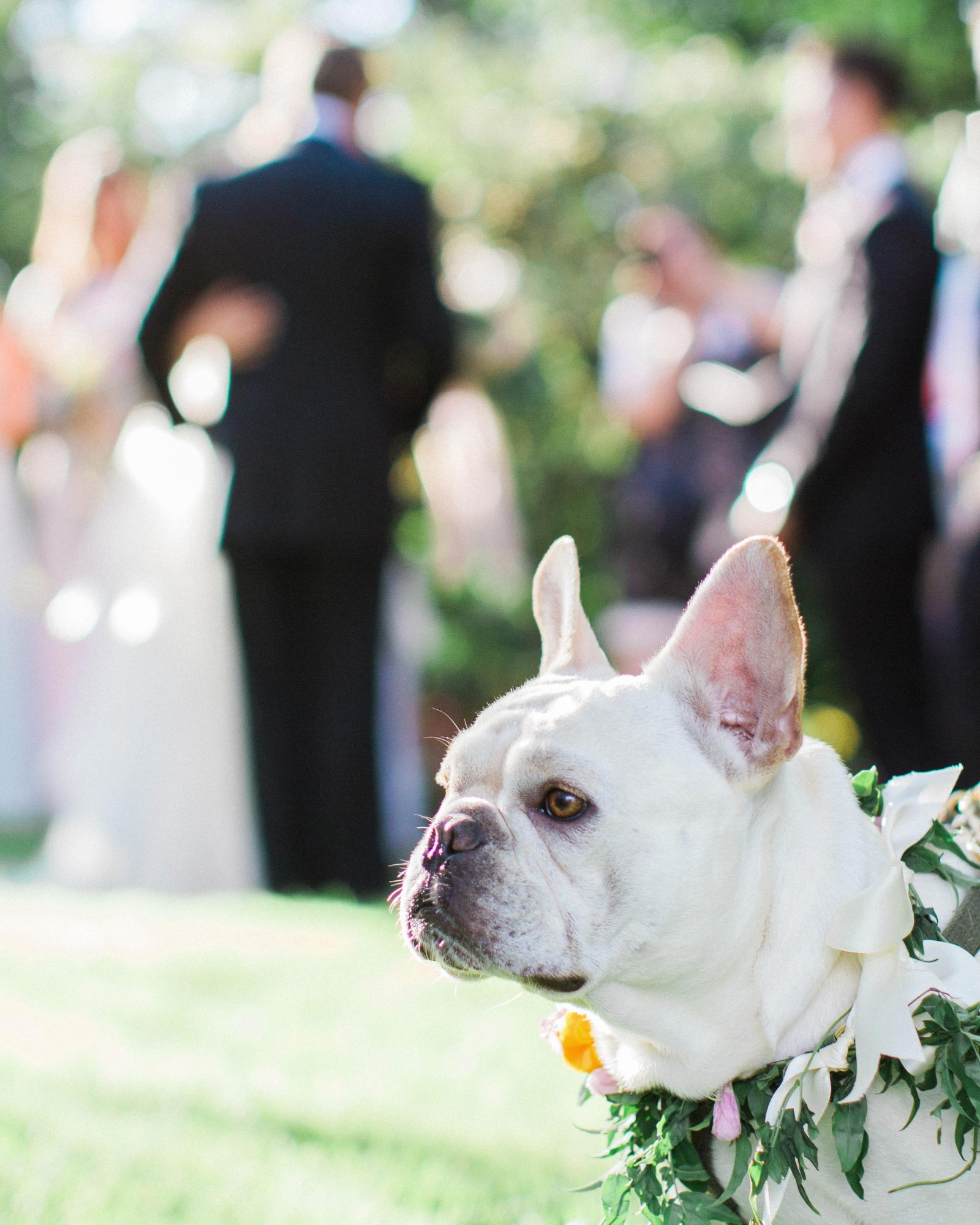 amy-garrison-wedding-dog-00503-6134266-0816.jpg