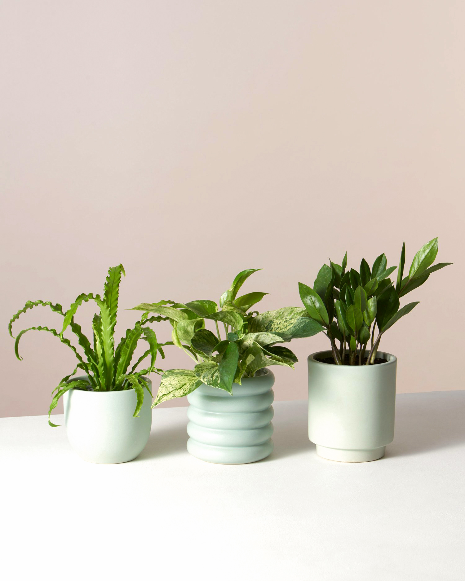 easy to grow houseplants in white pots