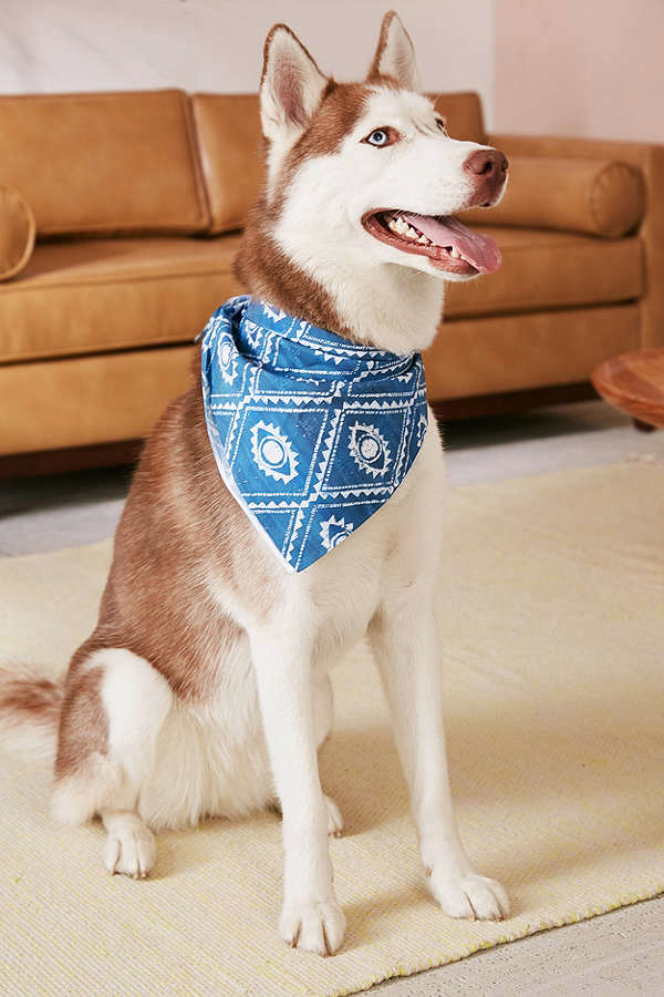 pet gift guide chambray tie collar felix chien