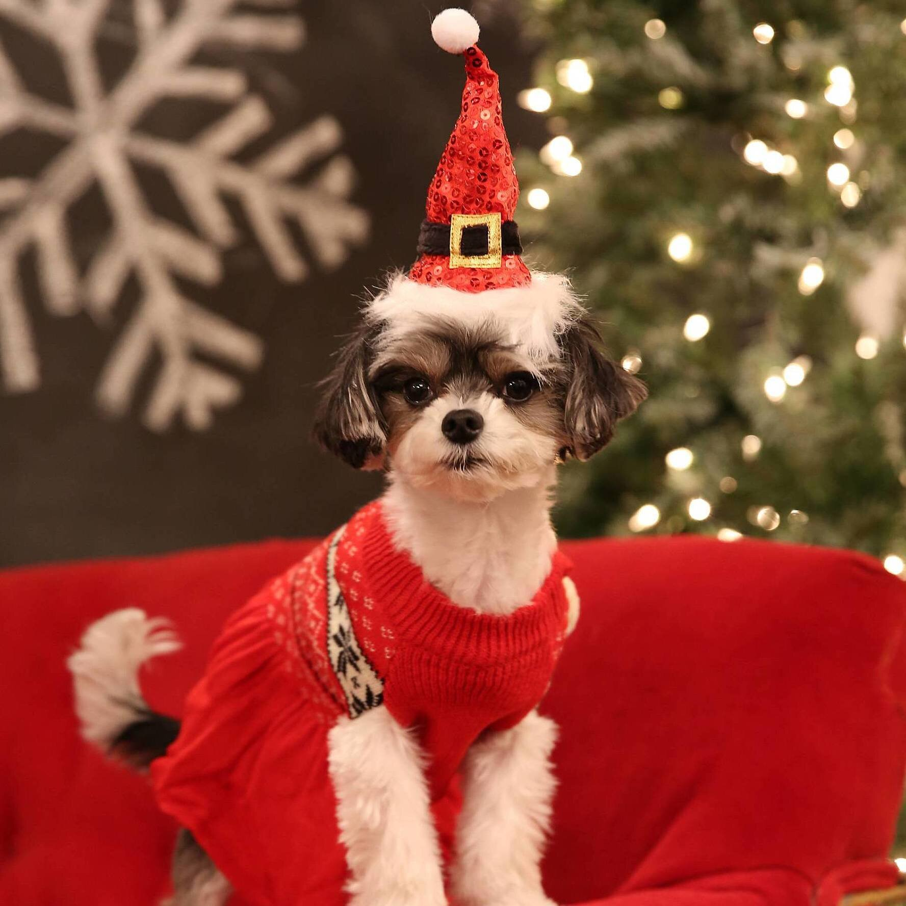 Petsmart Christmas Hours.Petsmart Hosted A Paws Itively Adorable Holiday Puppy Party