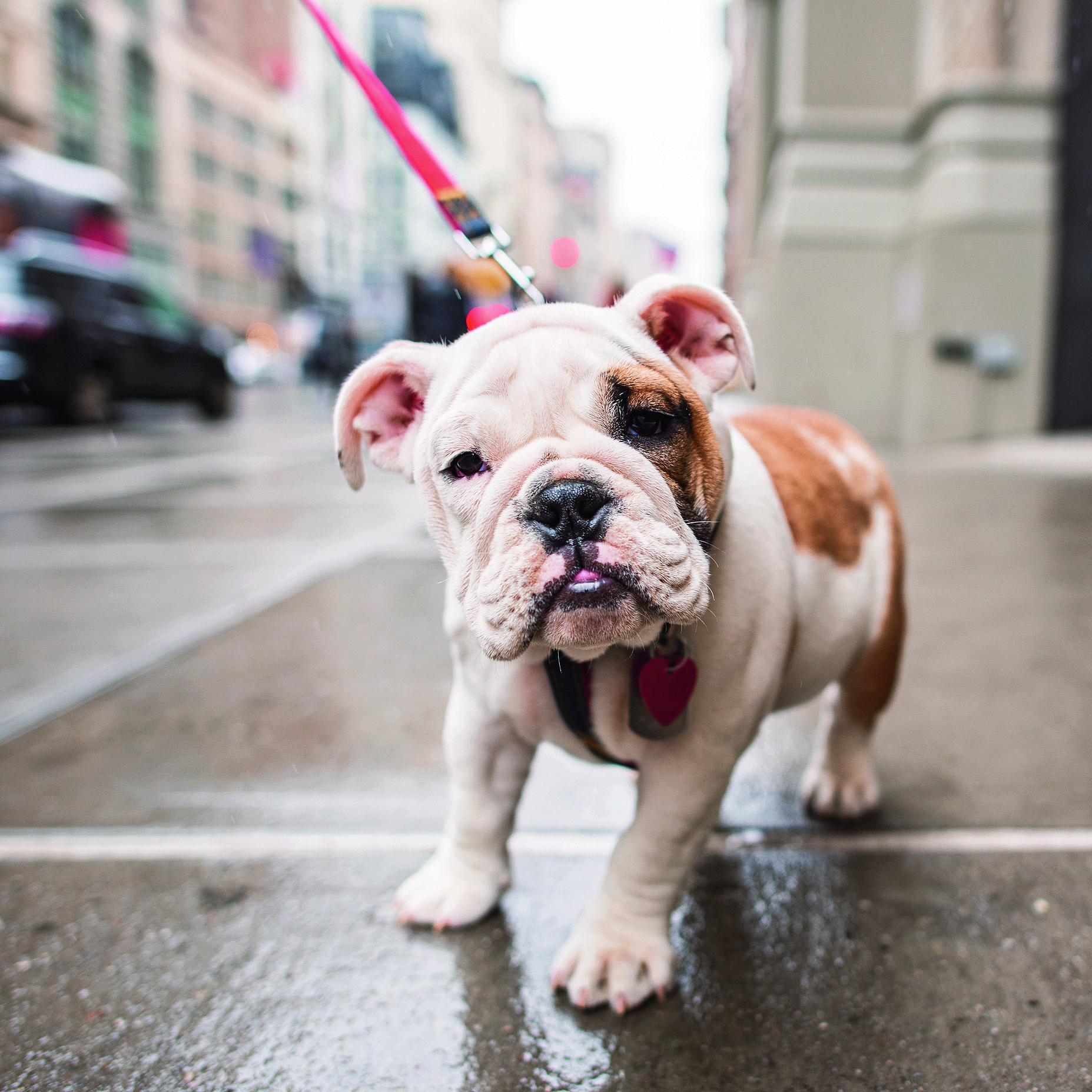 The Dogist Pup in the Rain