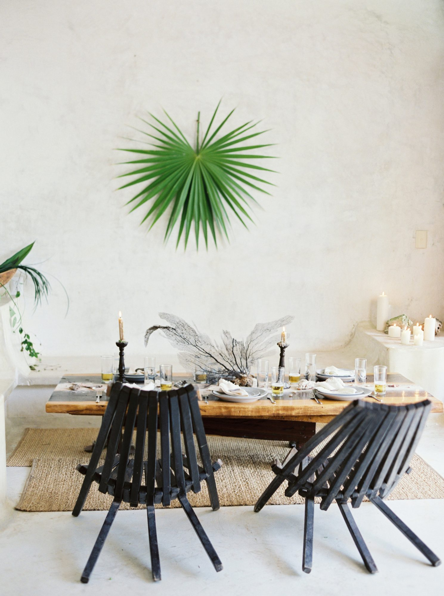 Spiked greenery on white wall