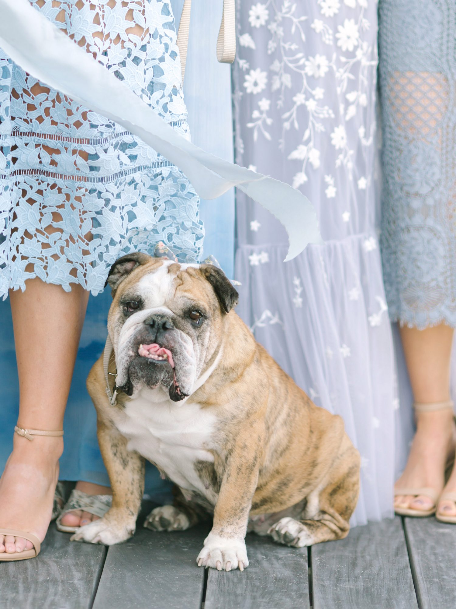 bride with dress dog
