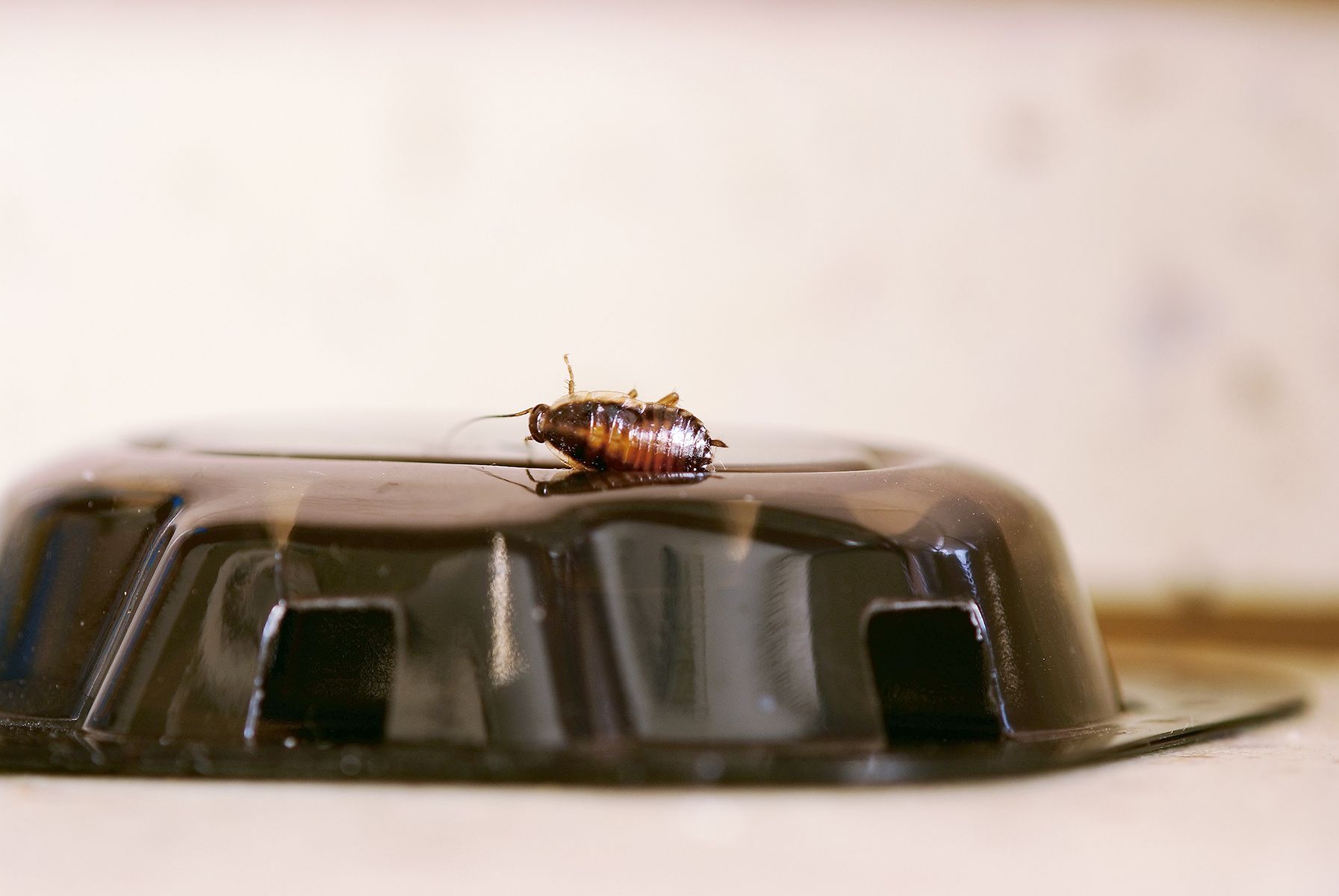 A cockroach is dead on top of a roach trap.