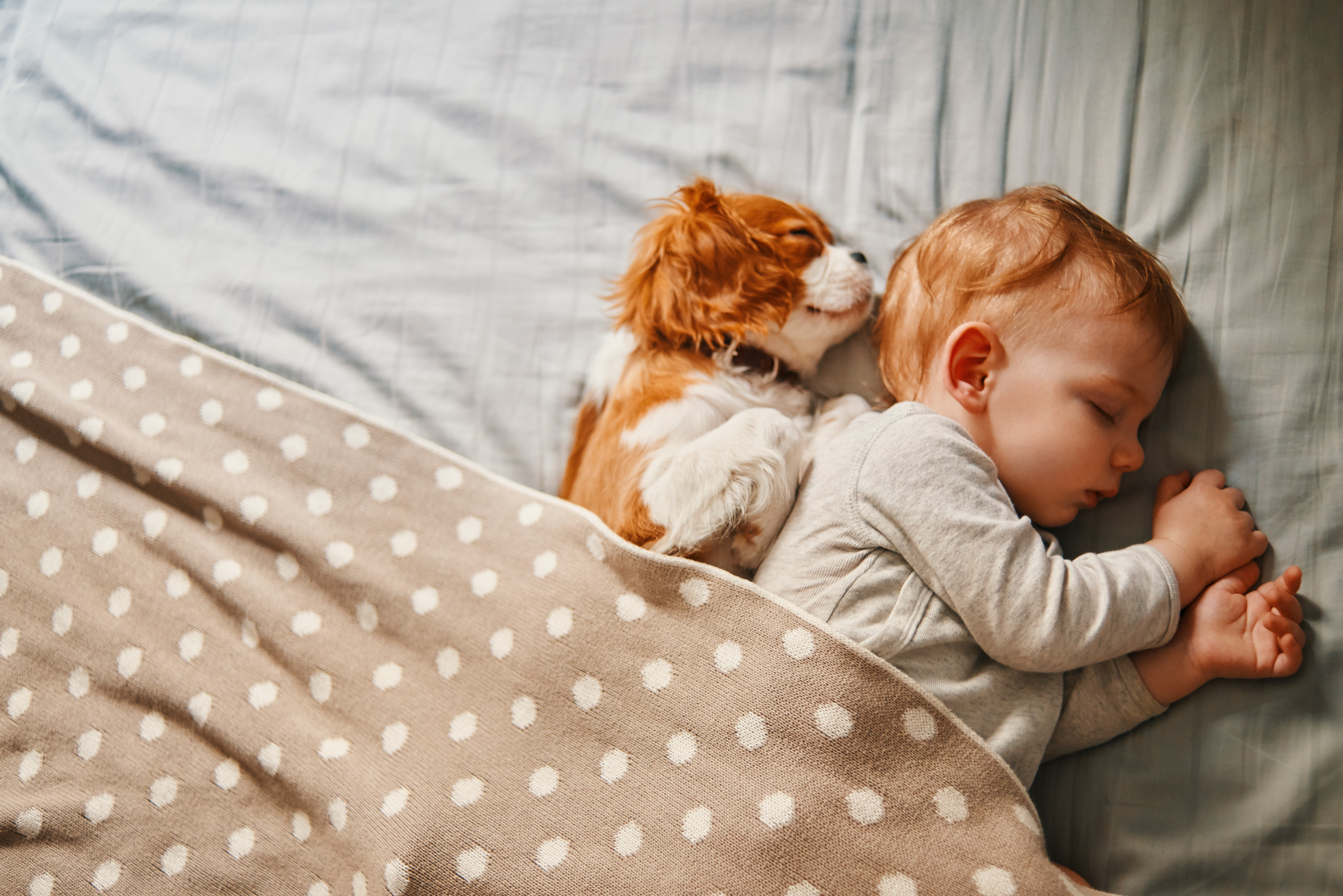 cute puppy and baby sleeping in bed