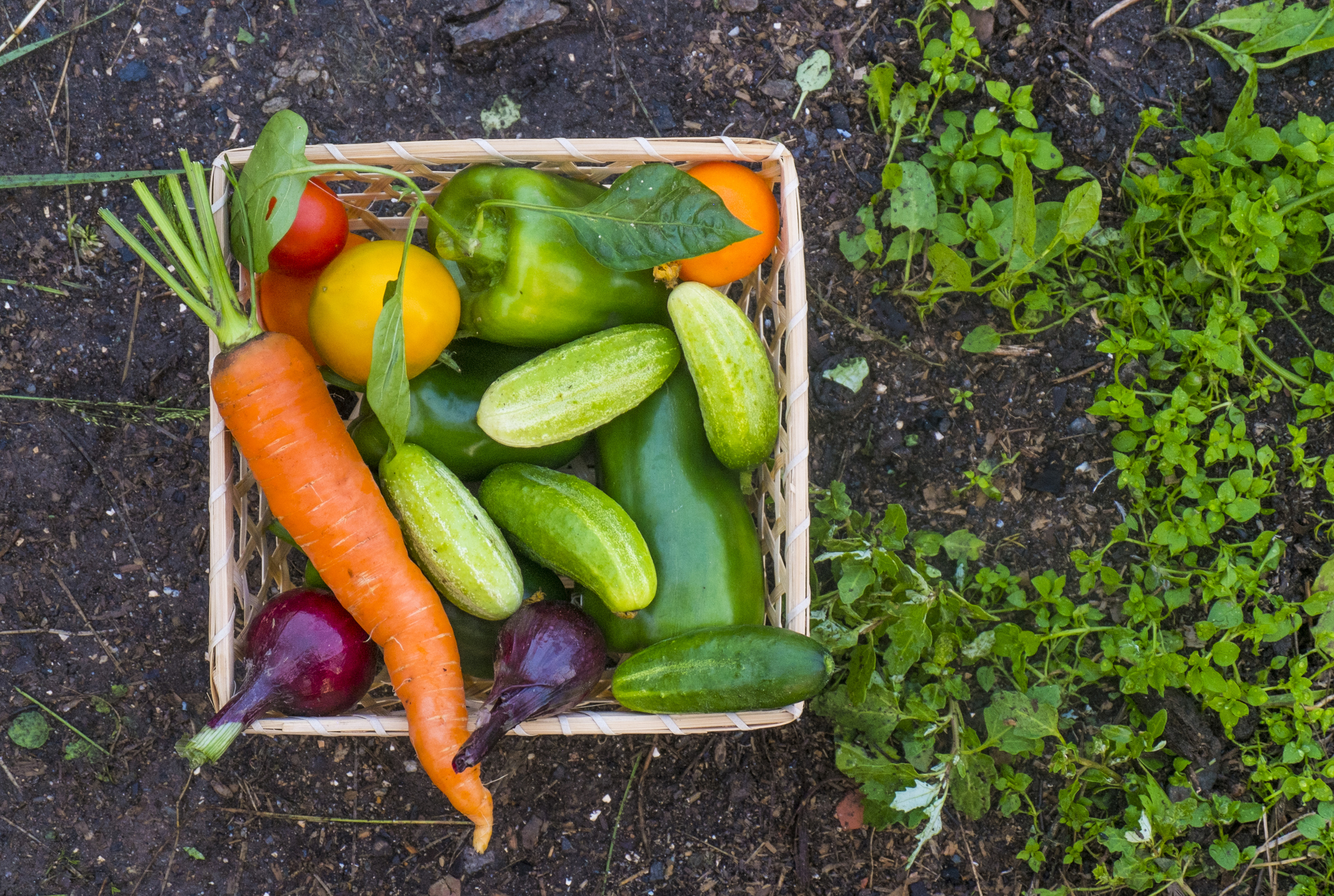 A colorful basket of vegetables sitting on the ground in a garden.