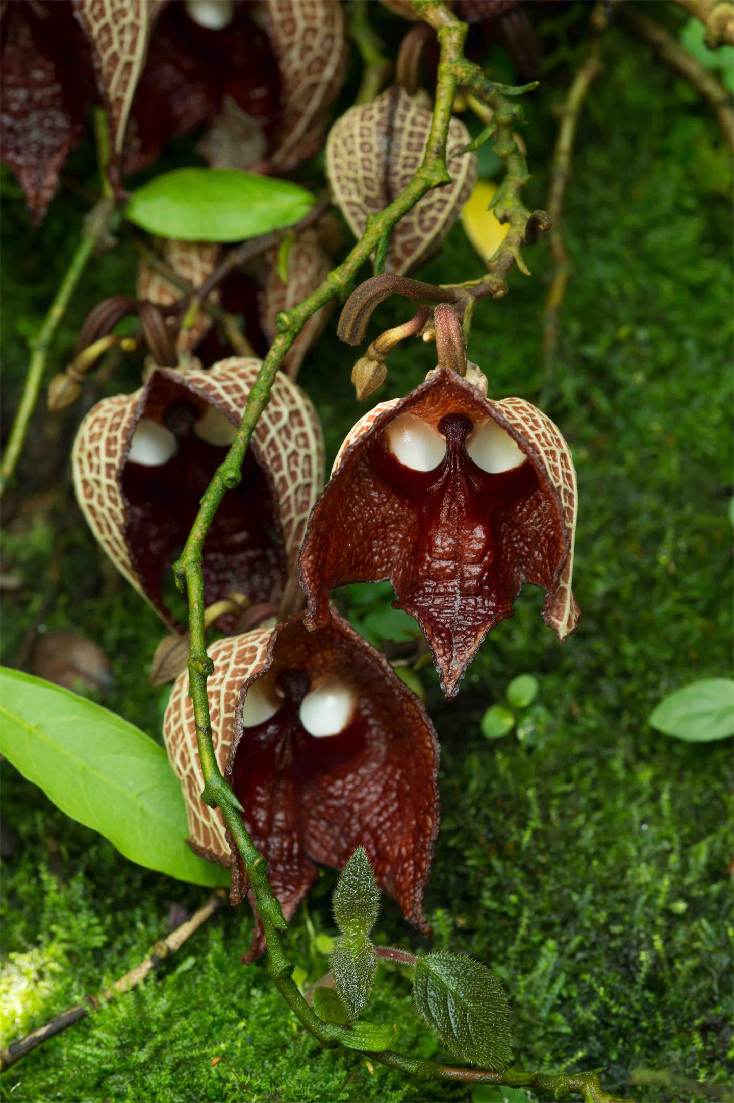 skull_plant_picture_0718
