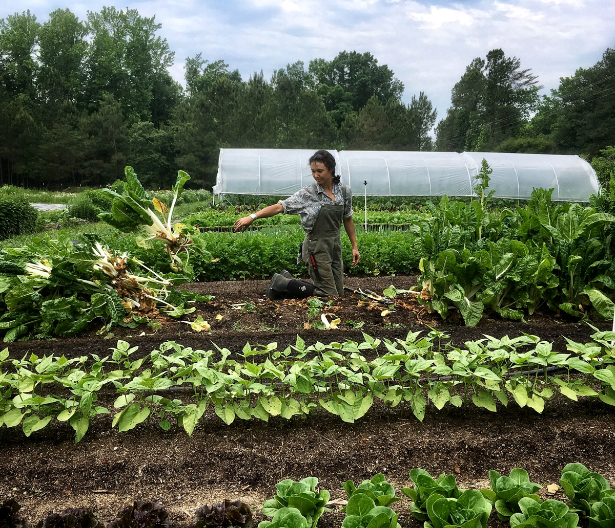 vera clearing chard ten mothers farm