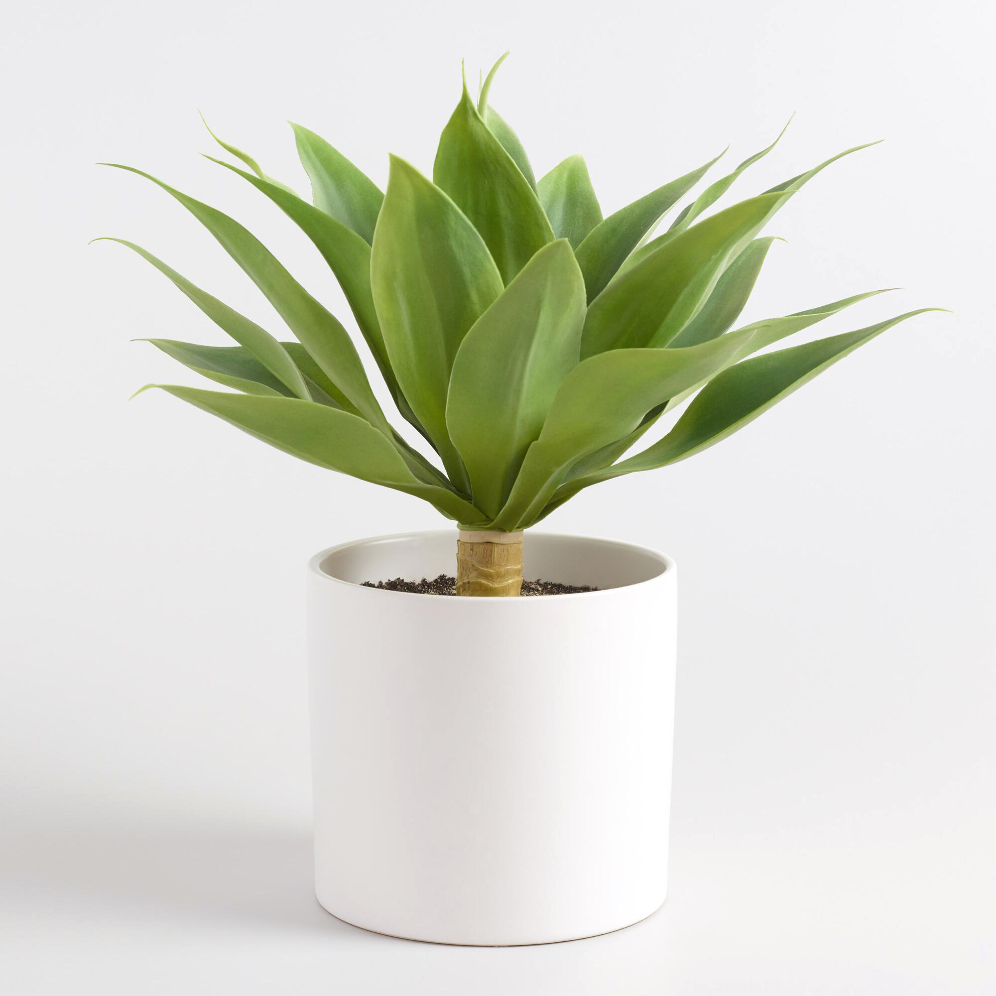 faux agave