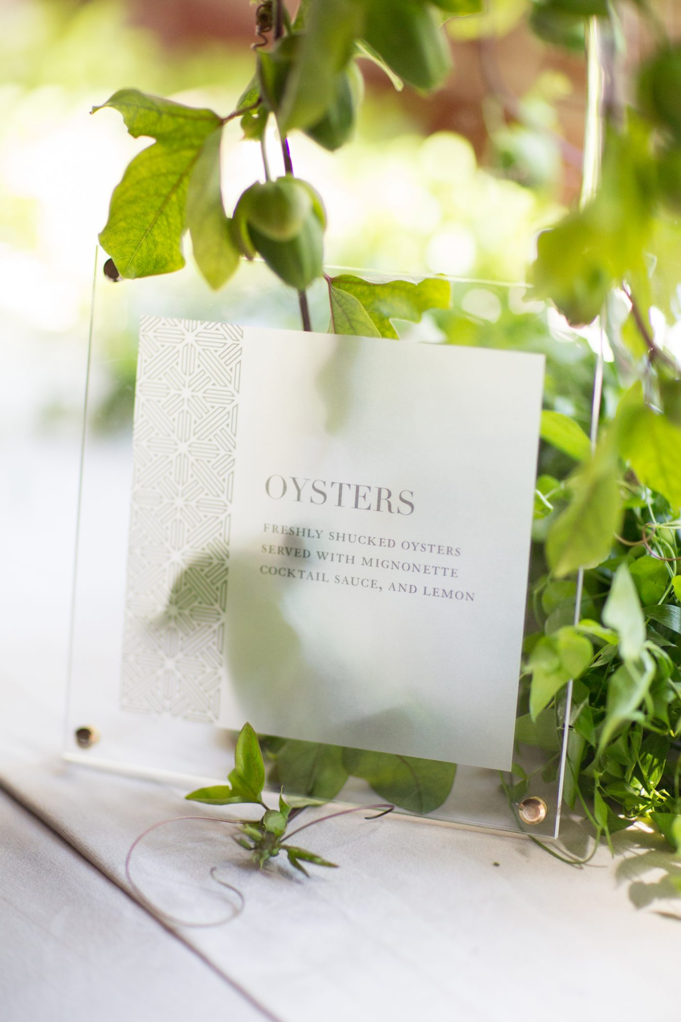 vellum signs with plants showing through
