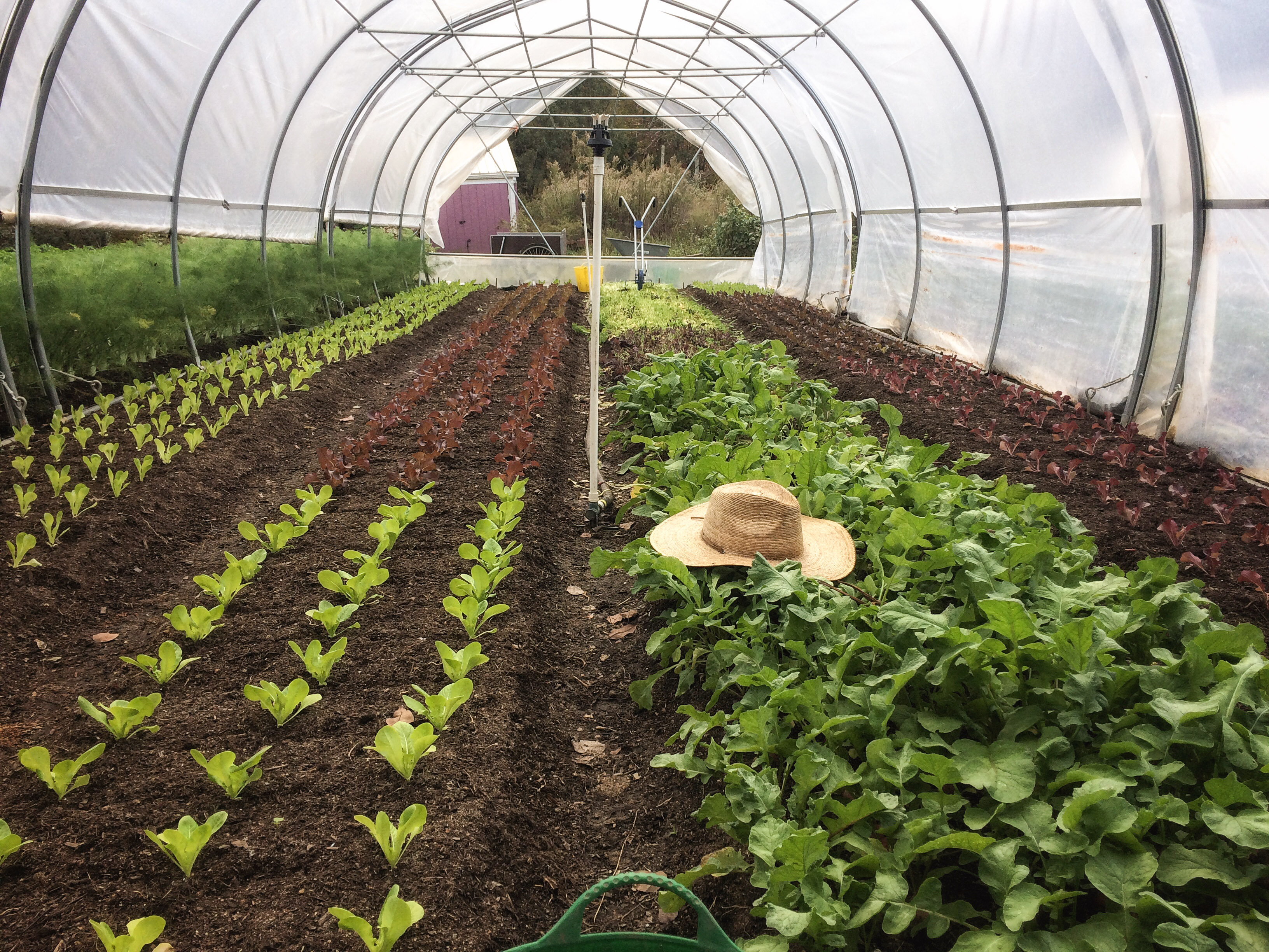 green house green crops with farmers hat
