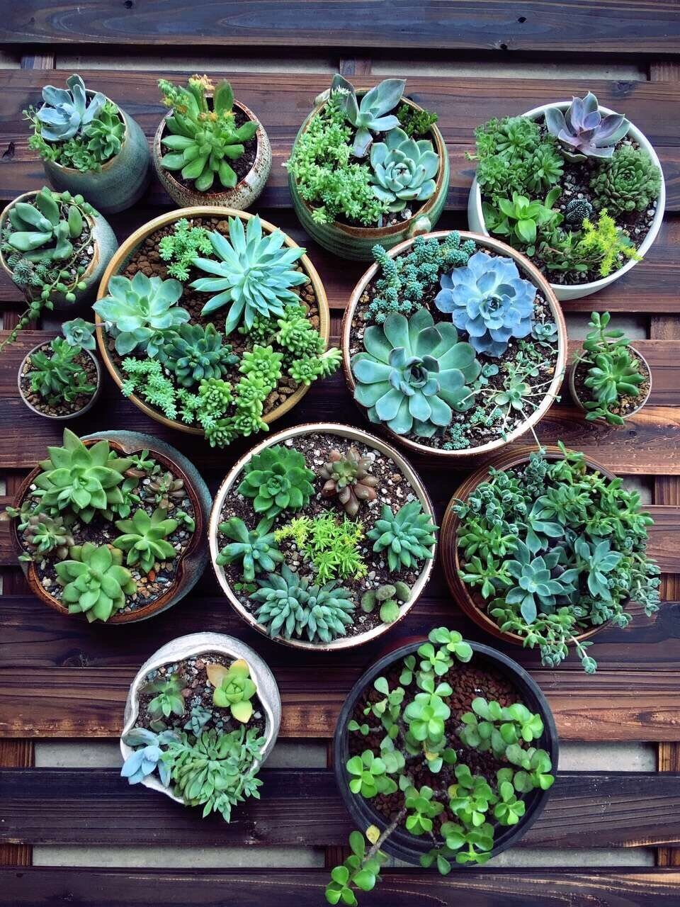 How To Care For Outdoor Succulents Martha