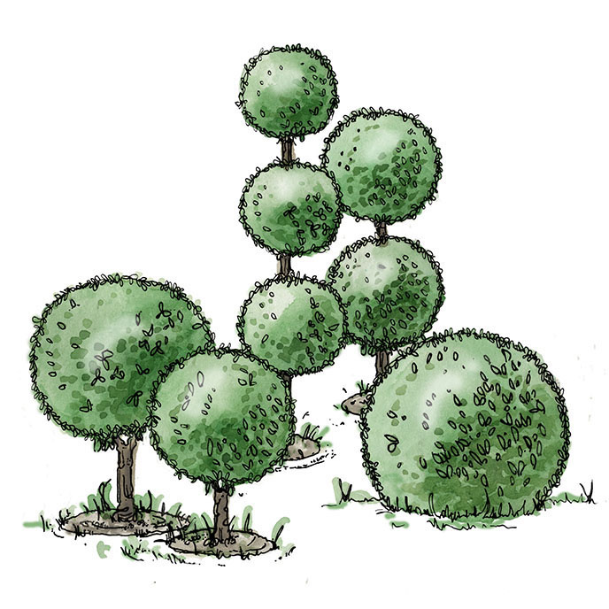 illustration of sphere shaped topiaries