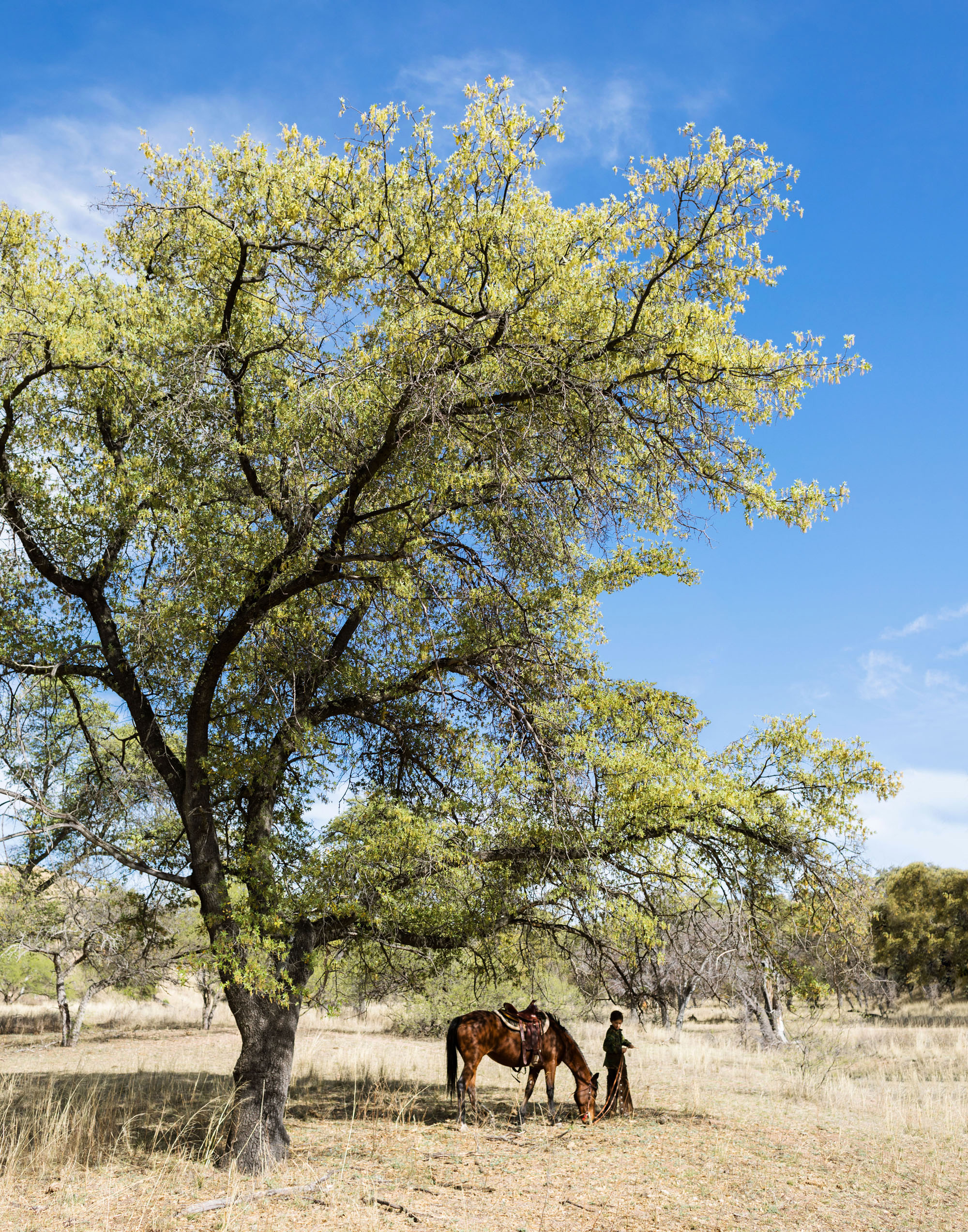 antoine and horse under tree