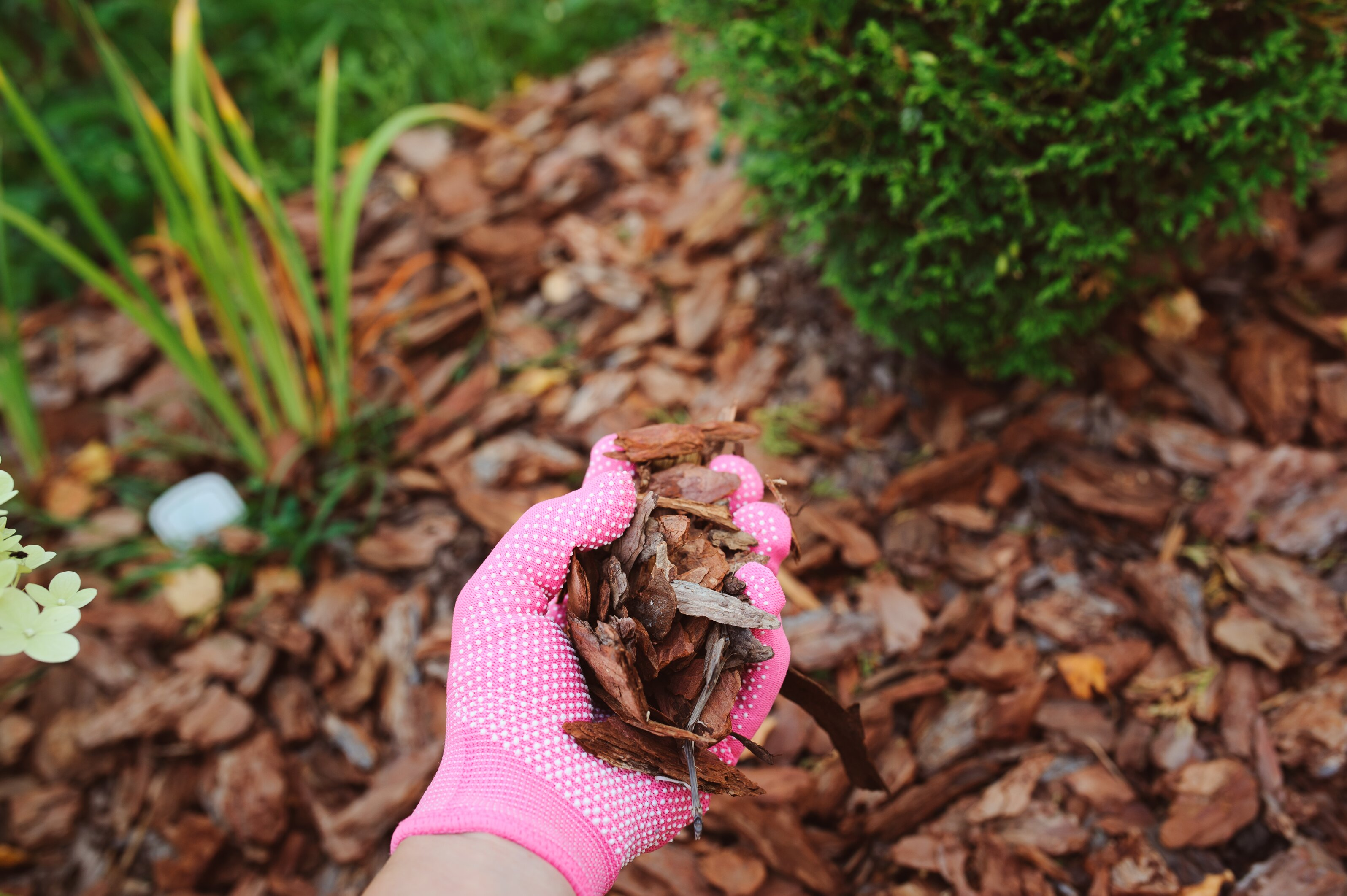 How To Choose The Right Mulch For Your Garden Martha Stewart