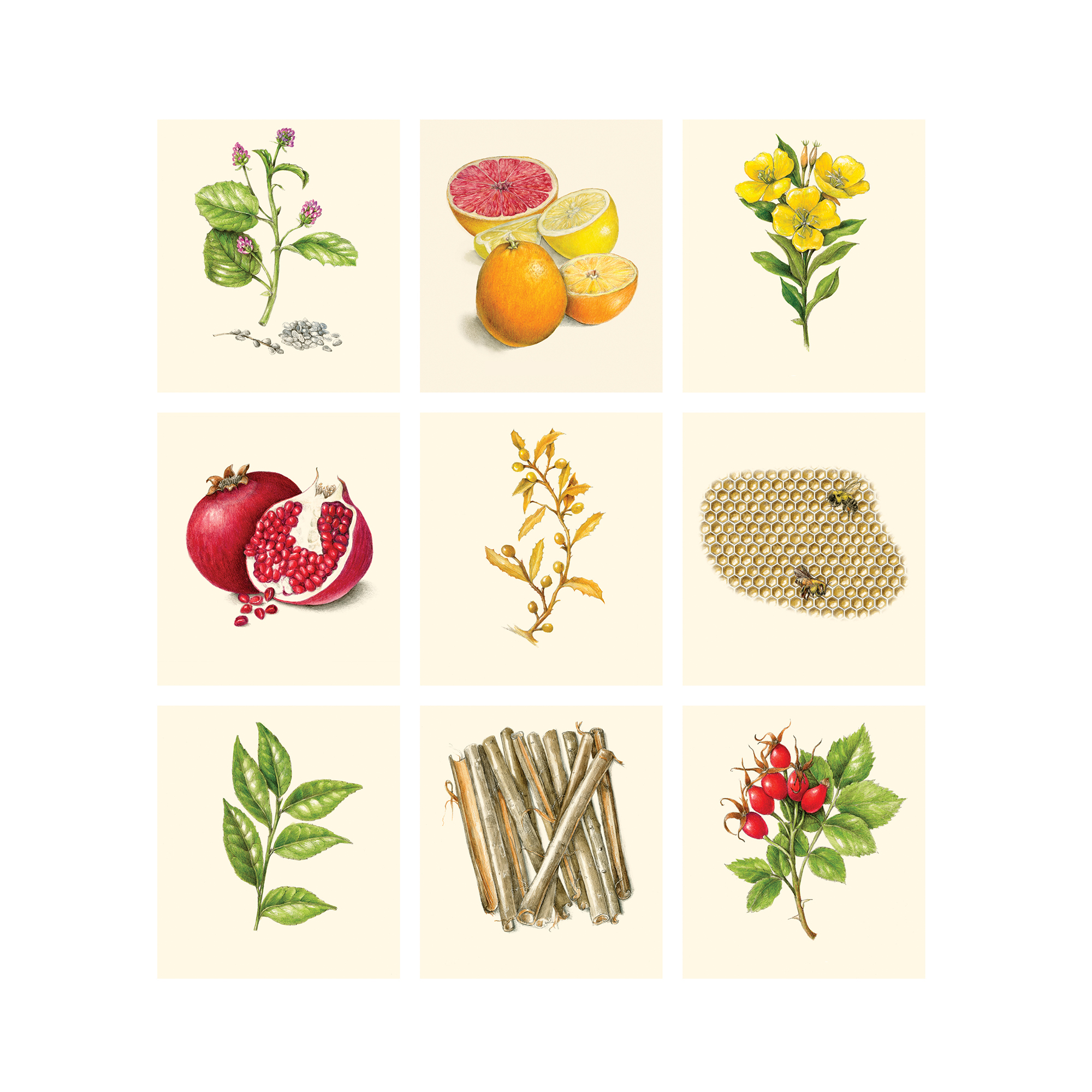 collage of illustrated plants