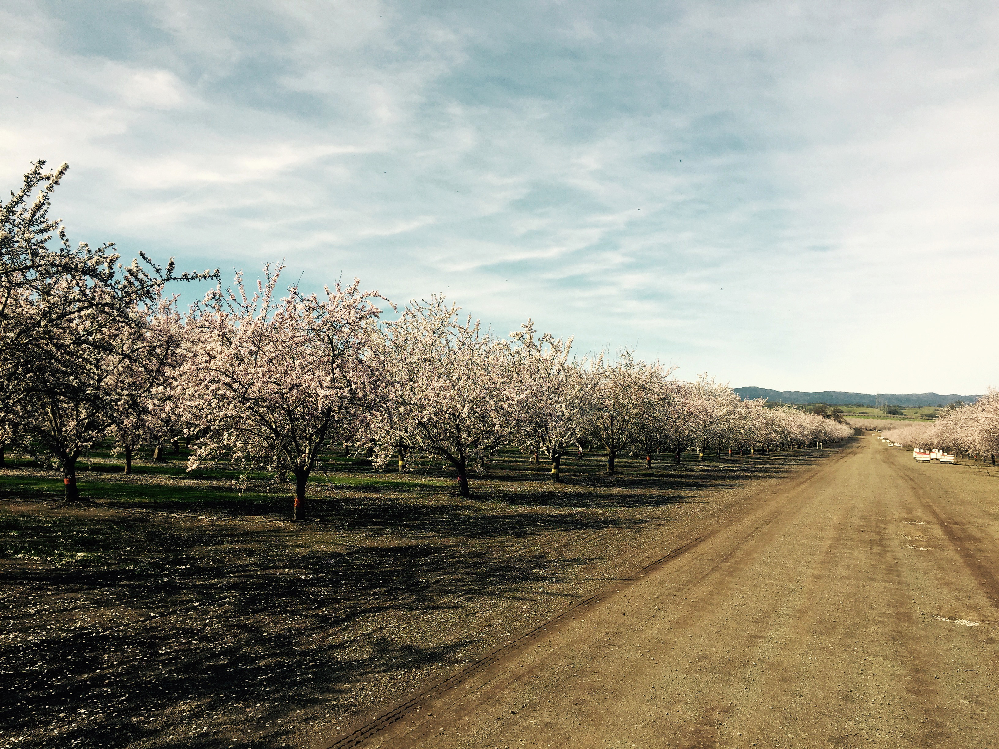 42 burners almond trip orchard hives trees