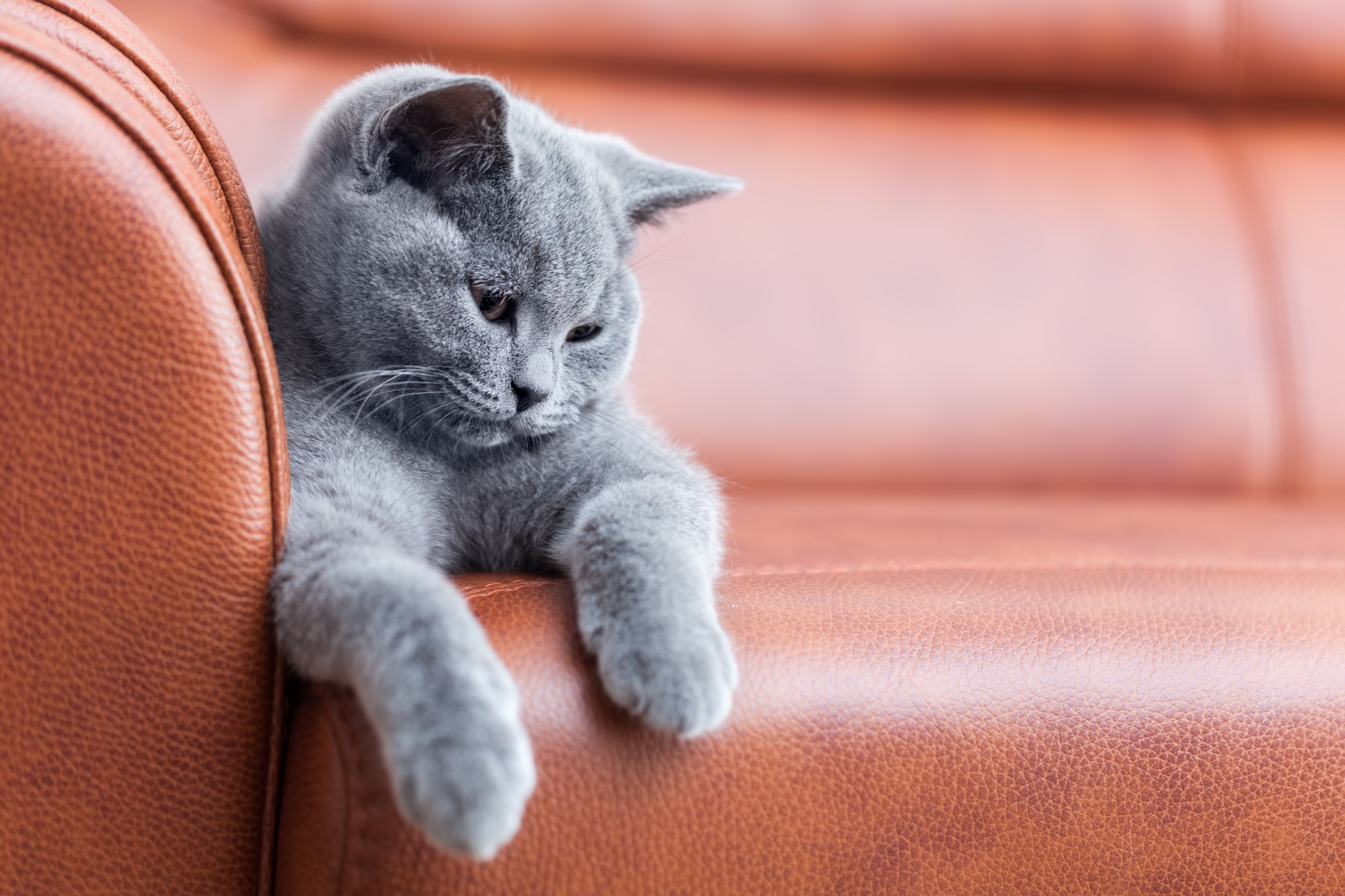 Fabulous How To Stop Your Cats From Scratching The Furniture Martha Squirreltailoven Fun Painted Chair Ideas Images Squirreltailovenorg