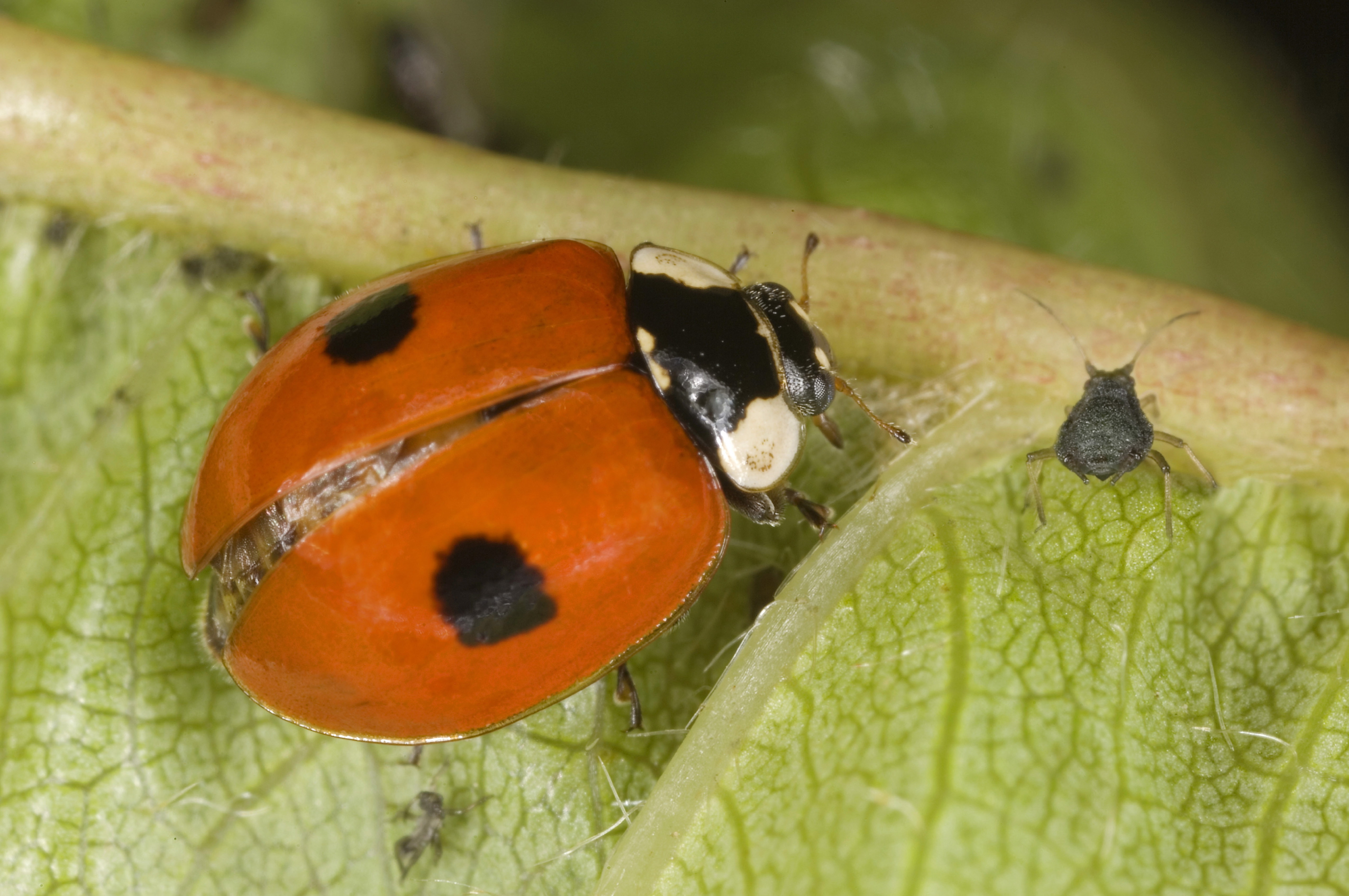 lady bug on green leaf
