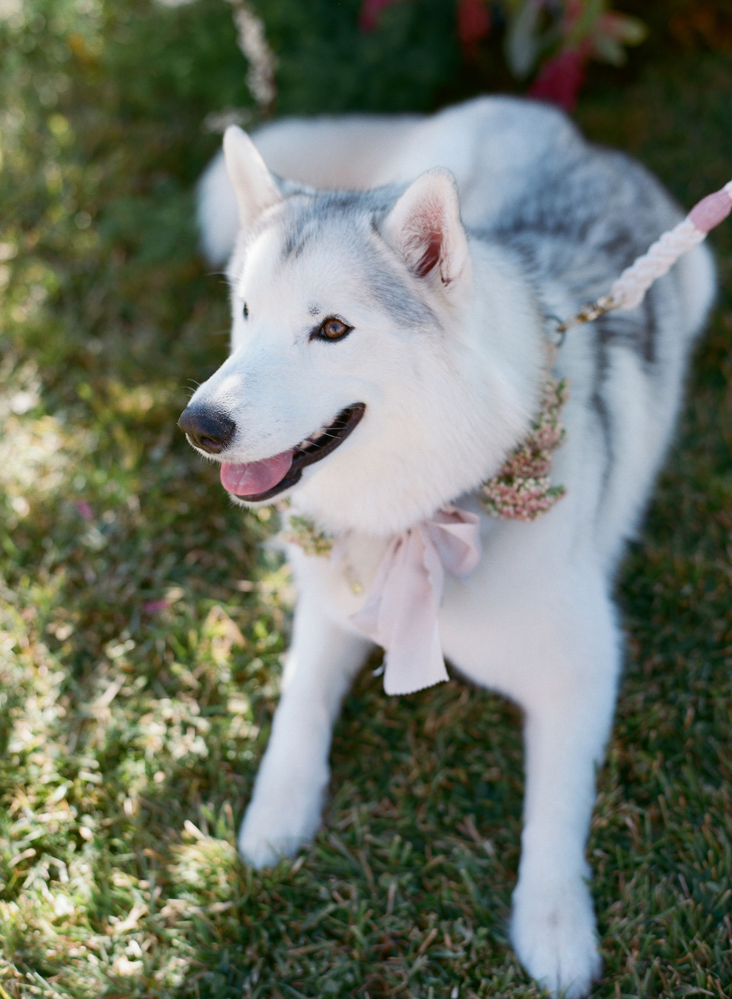 couples dog during wedding with floral bow collar