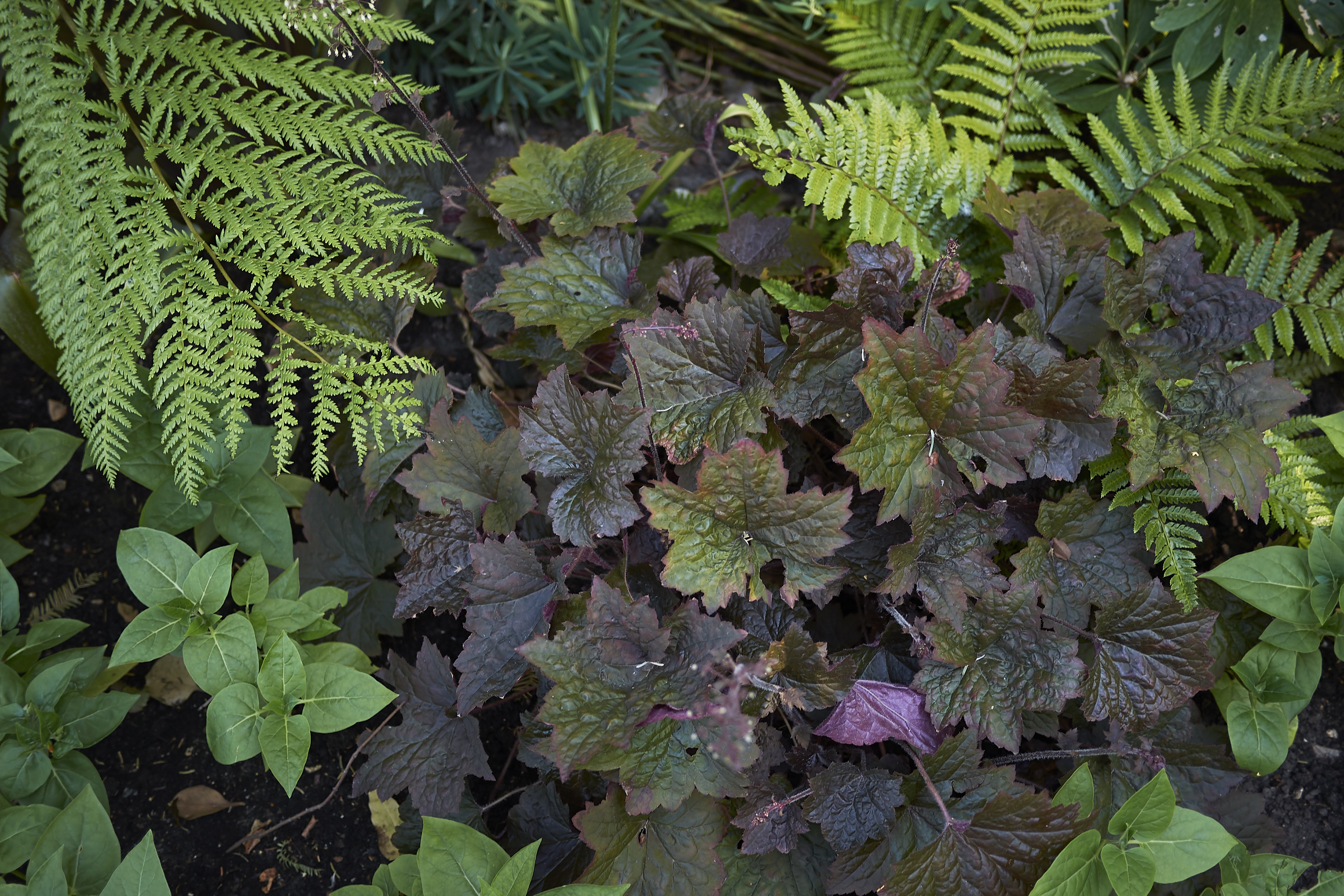 Seven Things to Know About Planting a Shade Garden