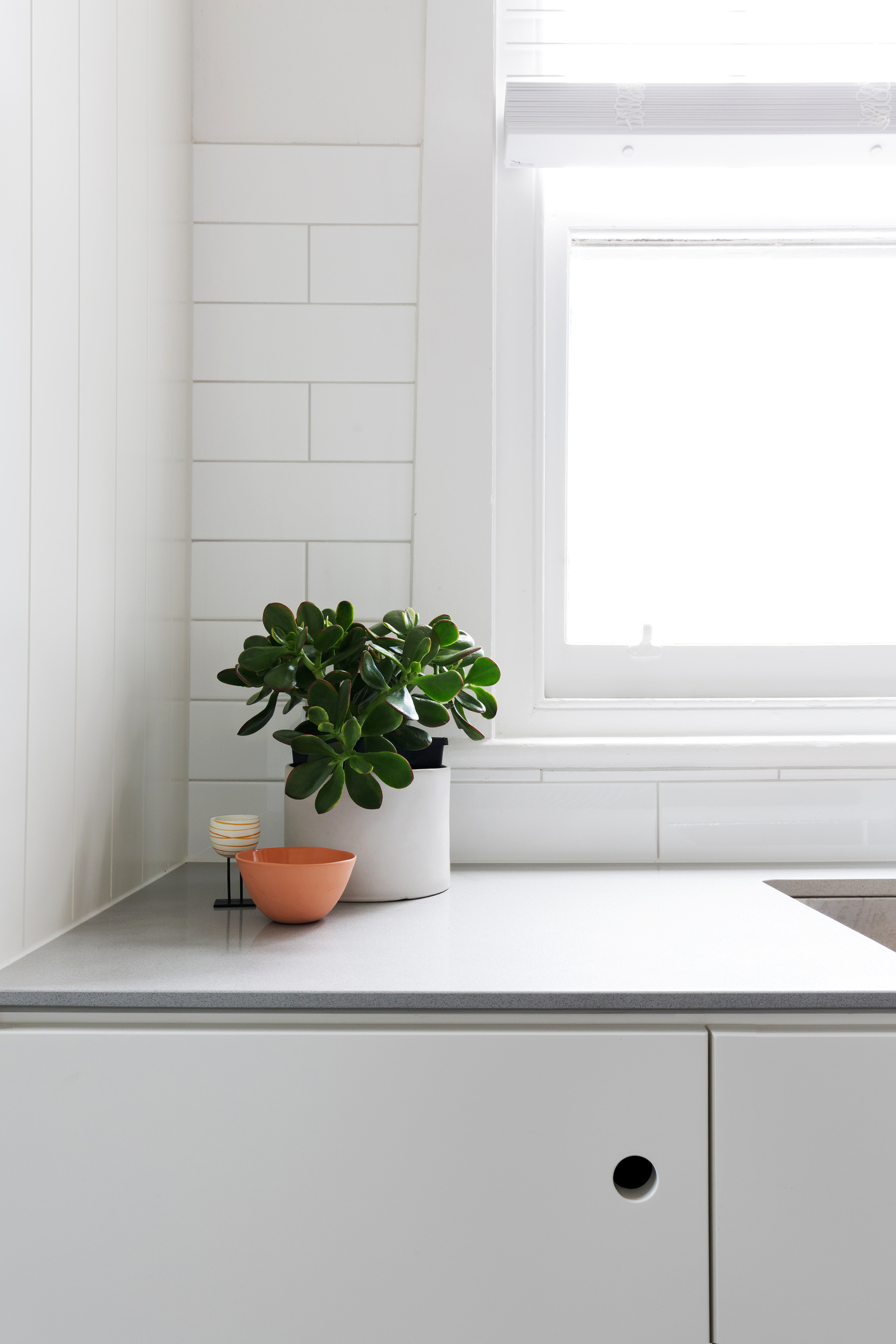 laminate countertop with potted plant