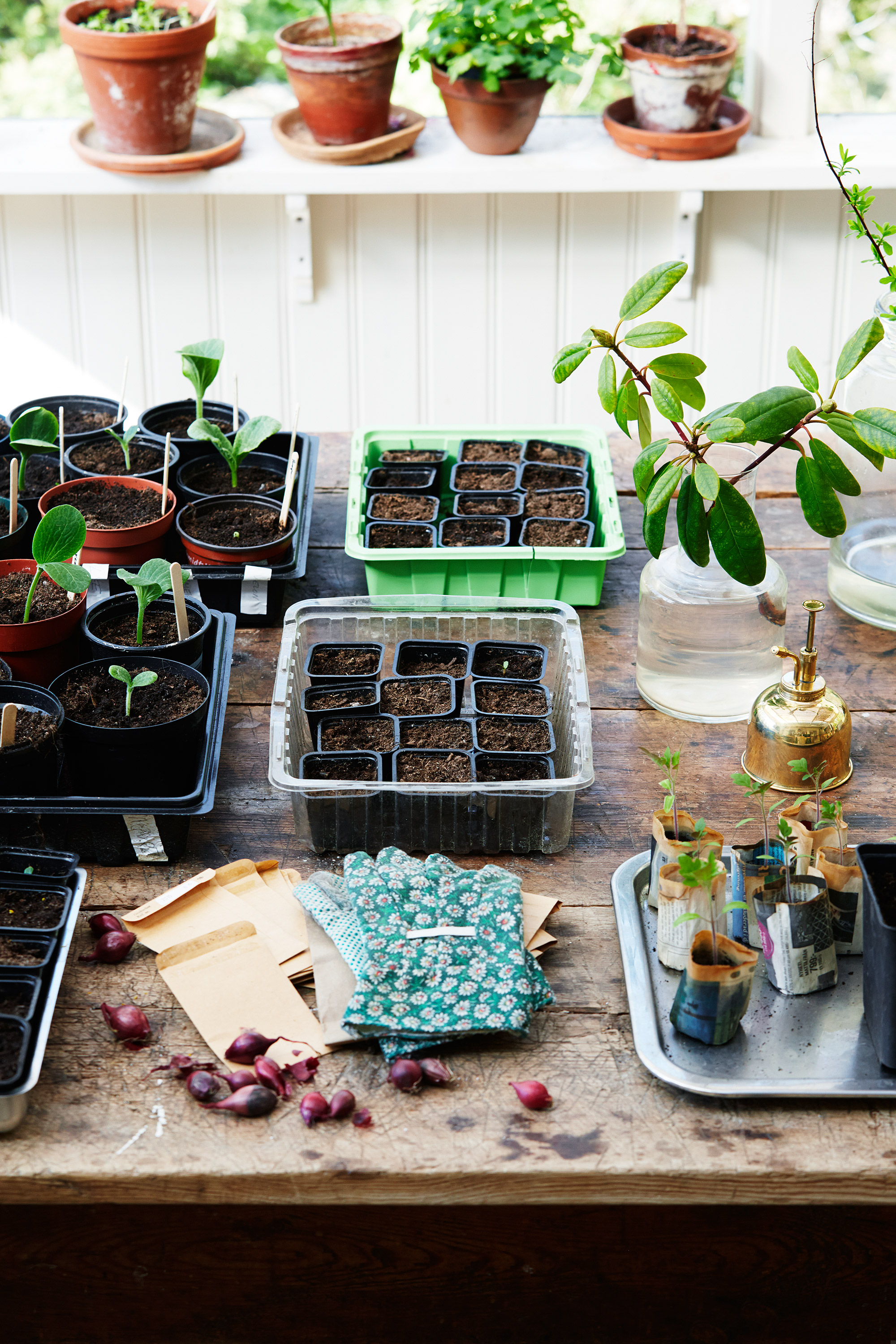 seedlings and potted plants in garden shed