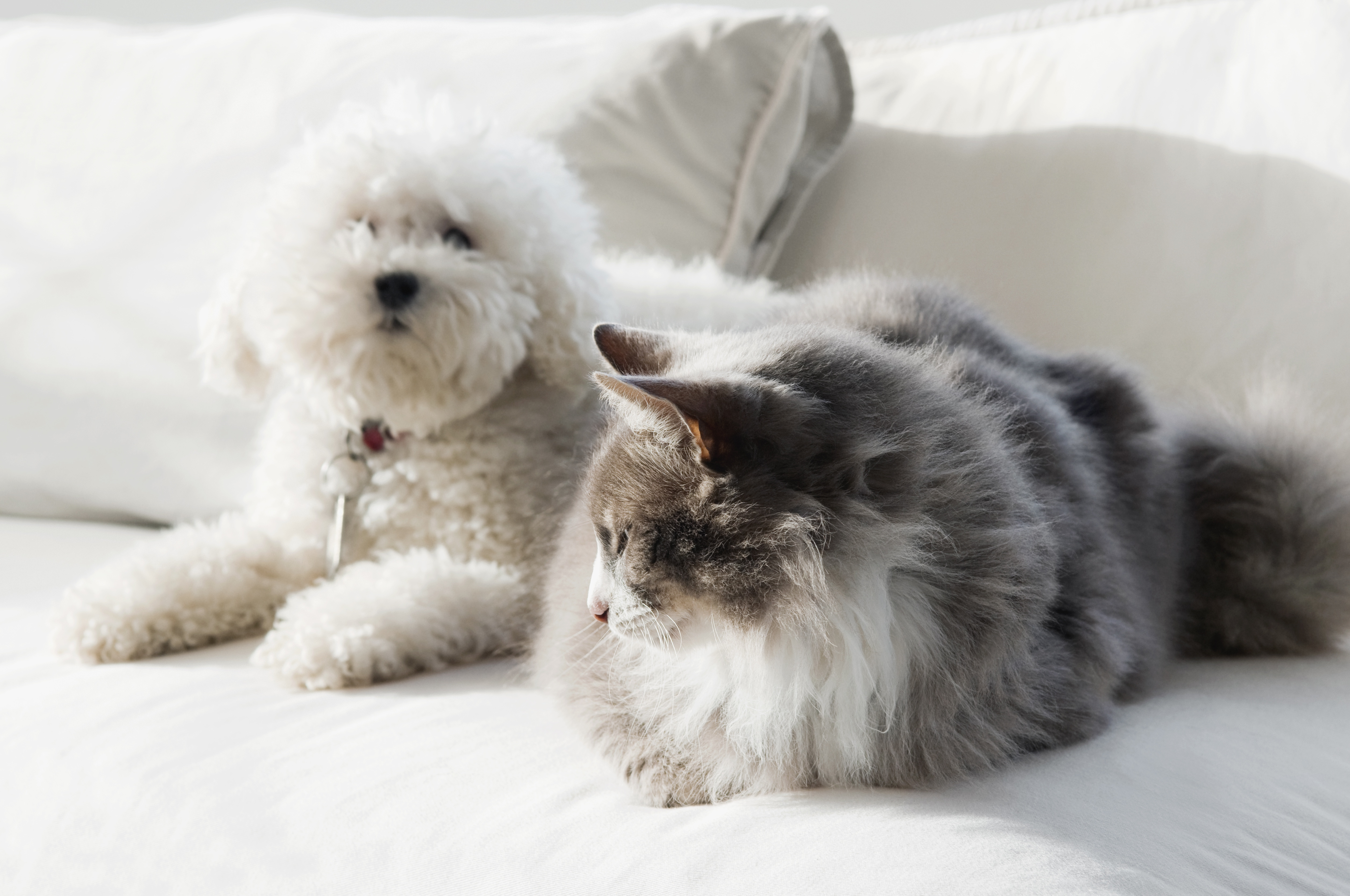dog and cat sitting on the couch