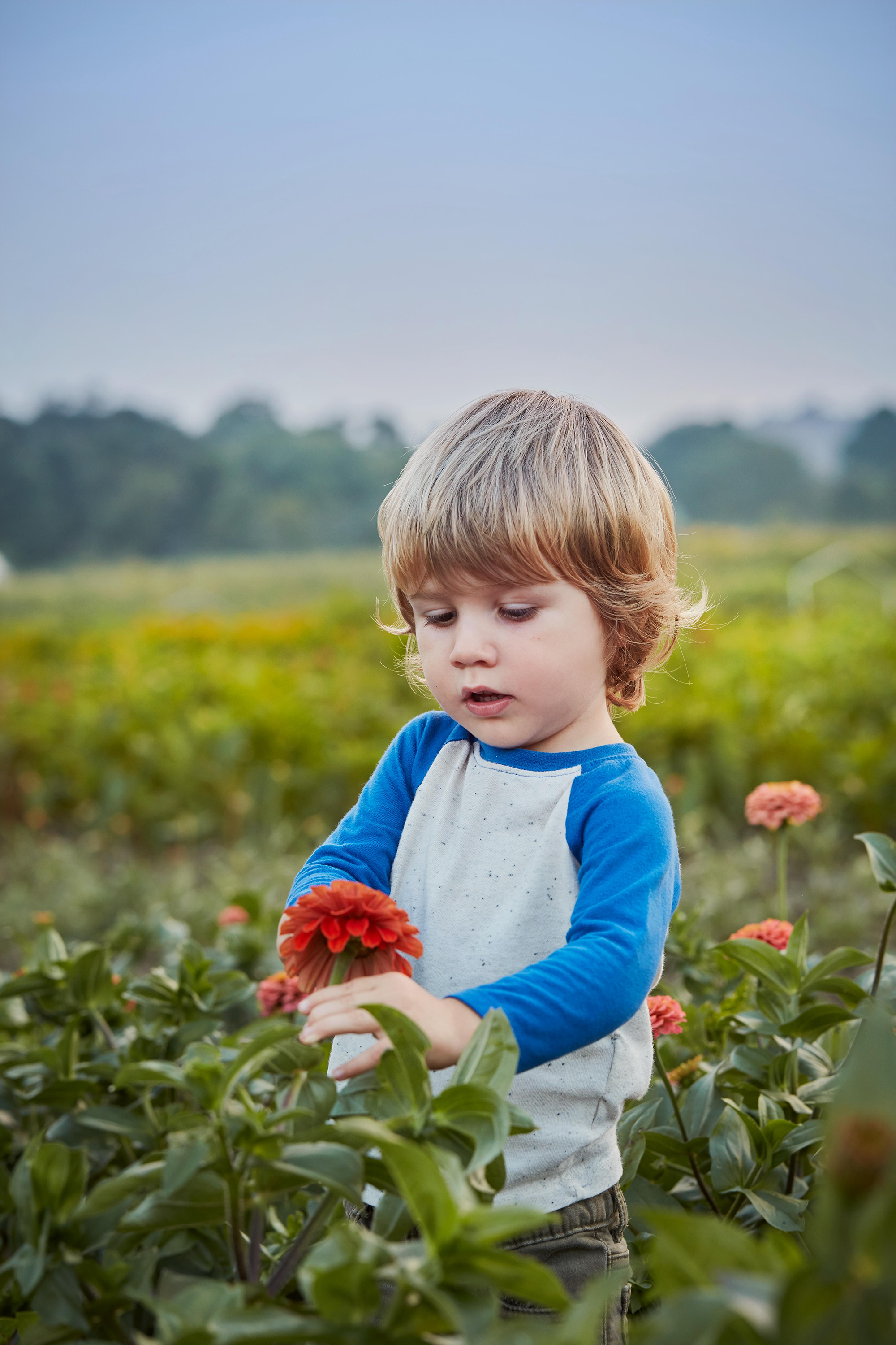 little boy playing with flowers in a field
