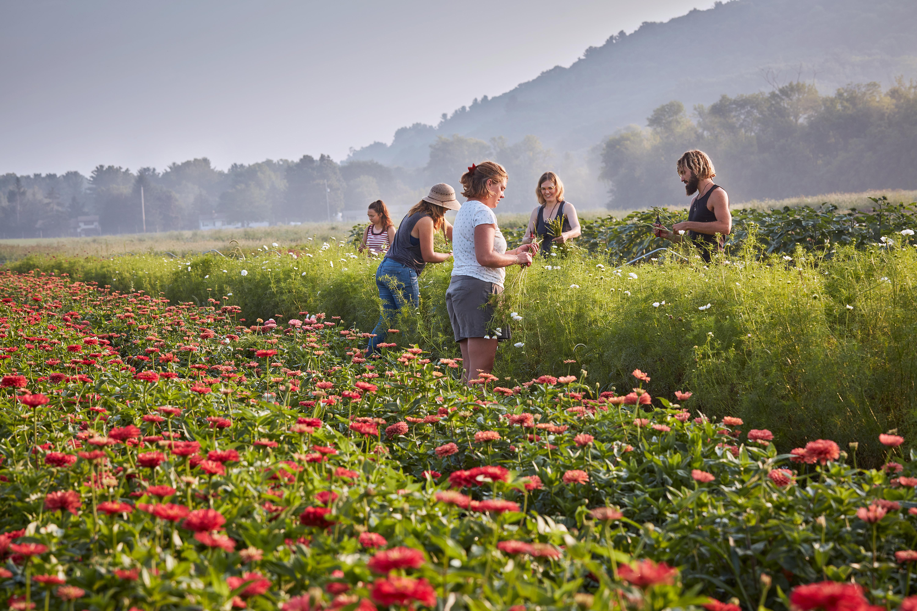 farmers working in a flower field