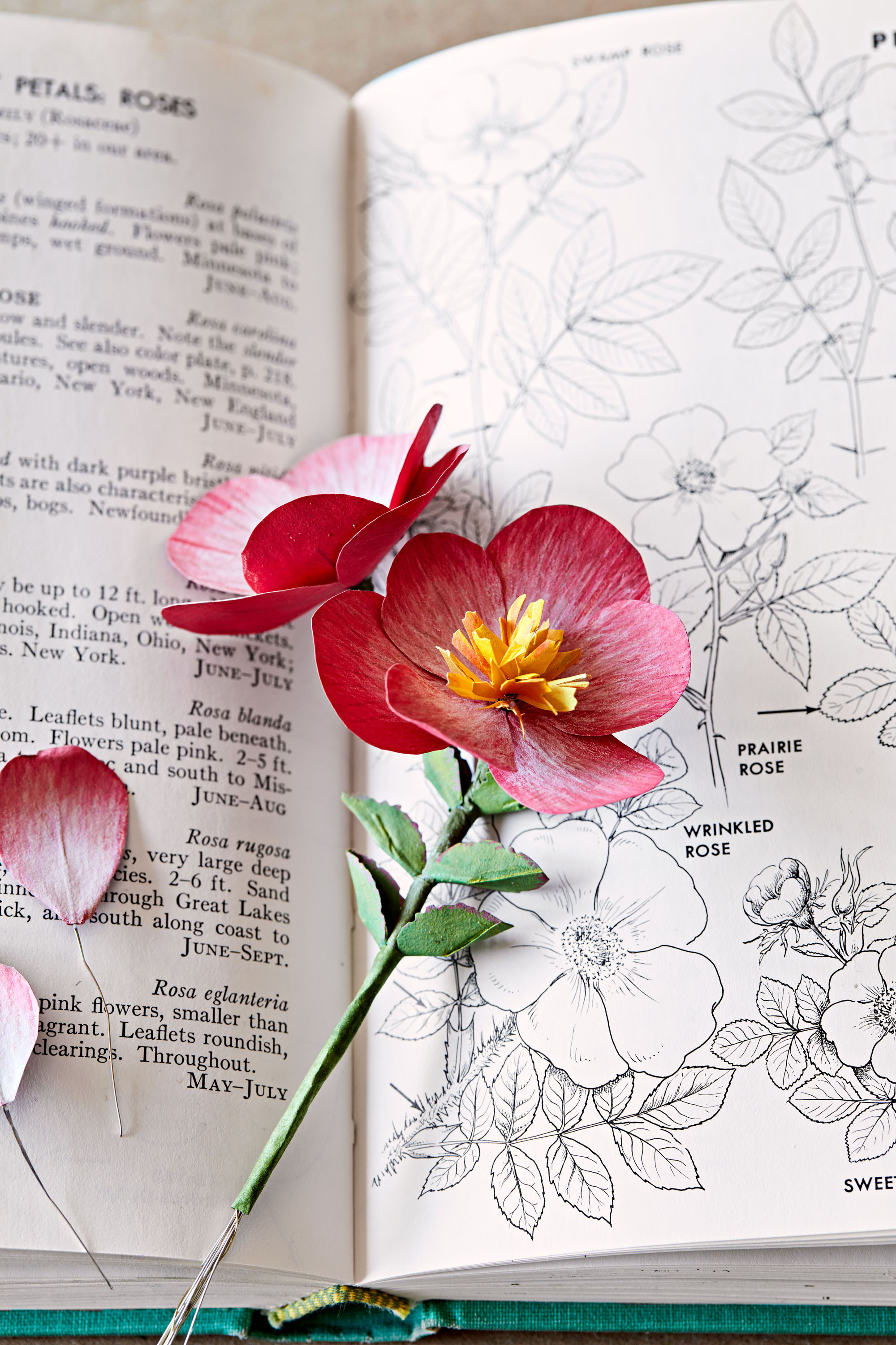 sculptural paper begonias propped up in an open botanical book
