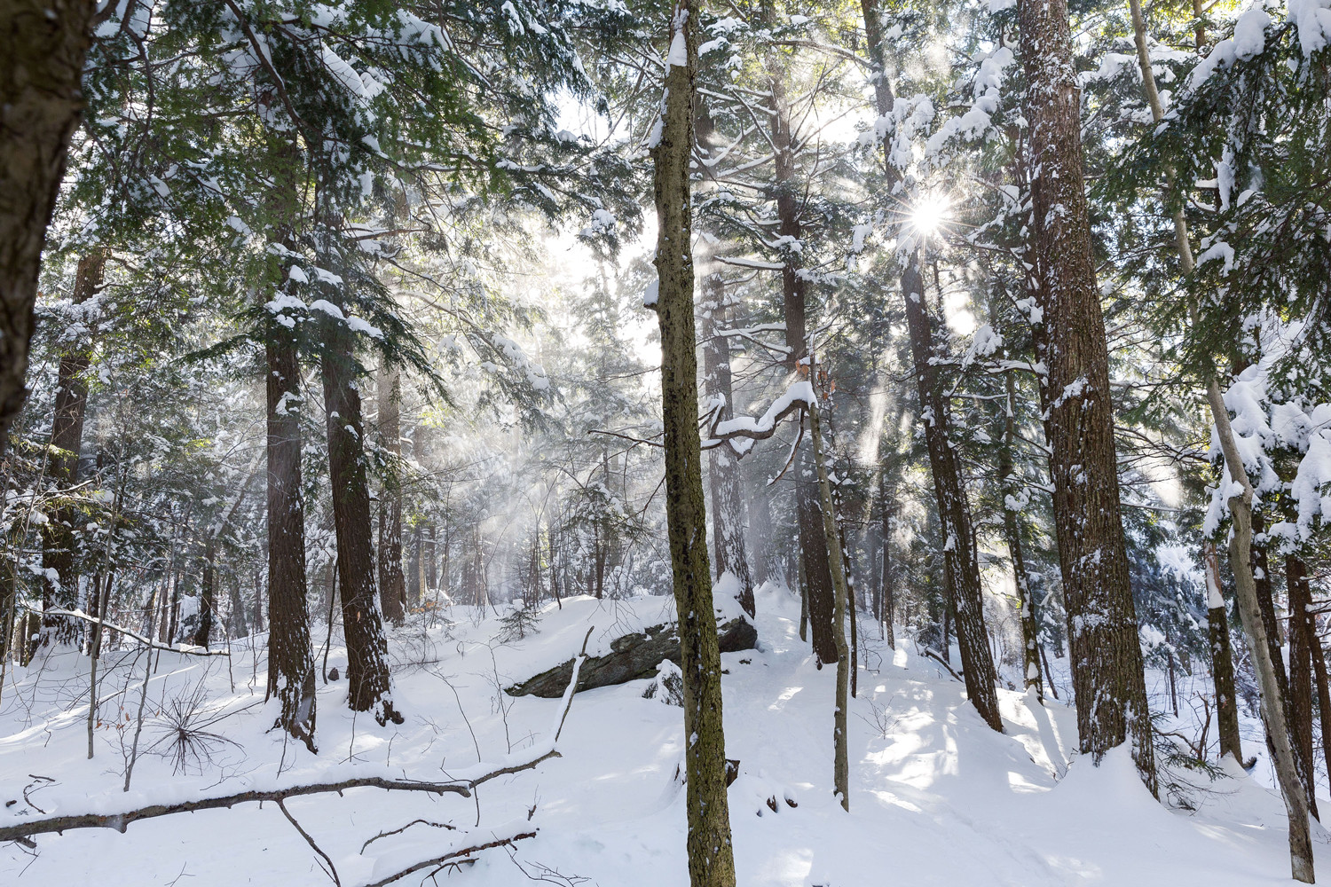 sun shining through forest covered with snow